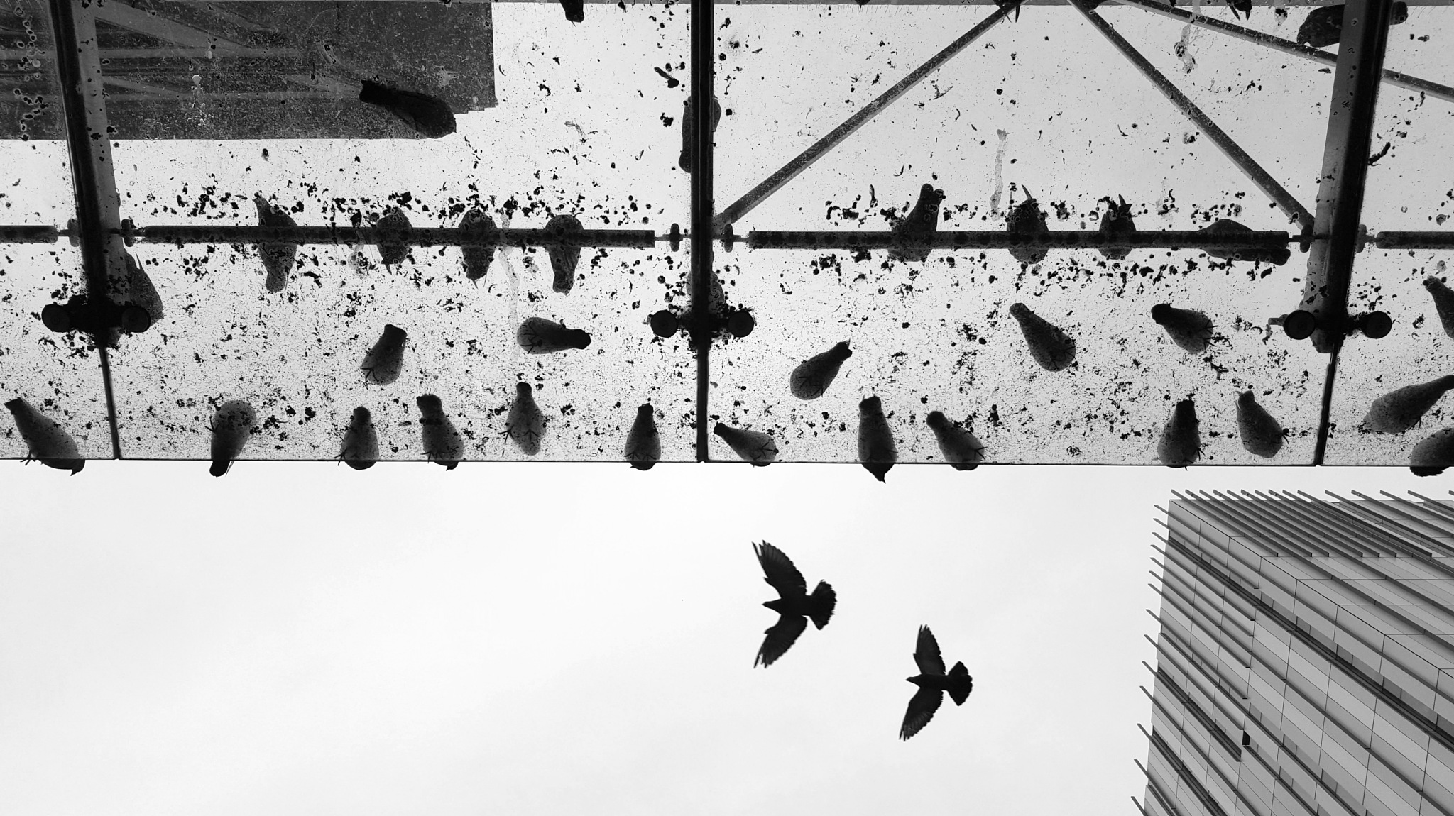 Birds in the city by JuditkaB