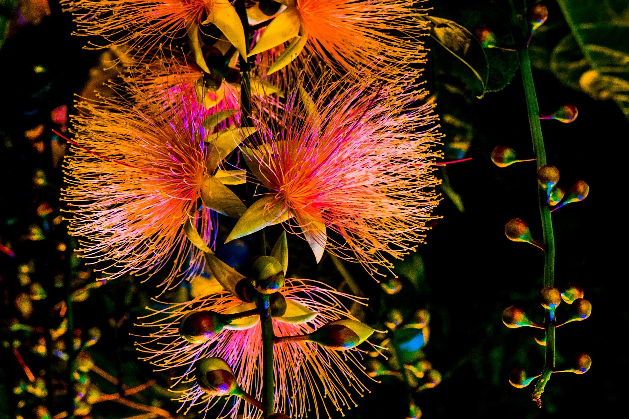 Summer Night Fireworks  by Ladygogo