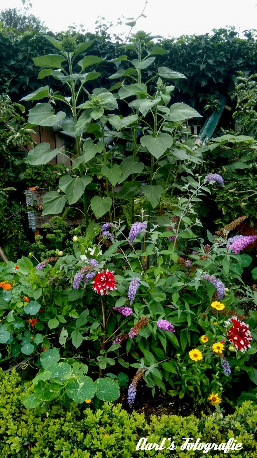 My sisters garden  by Aart Bol
