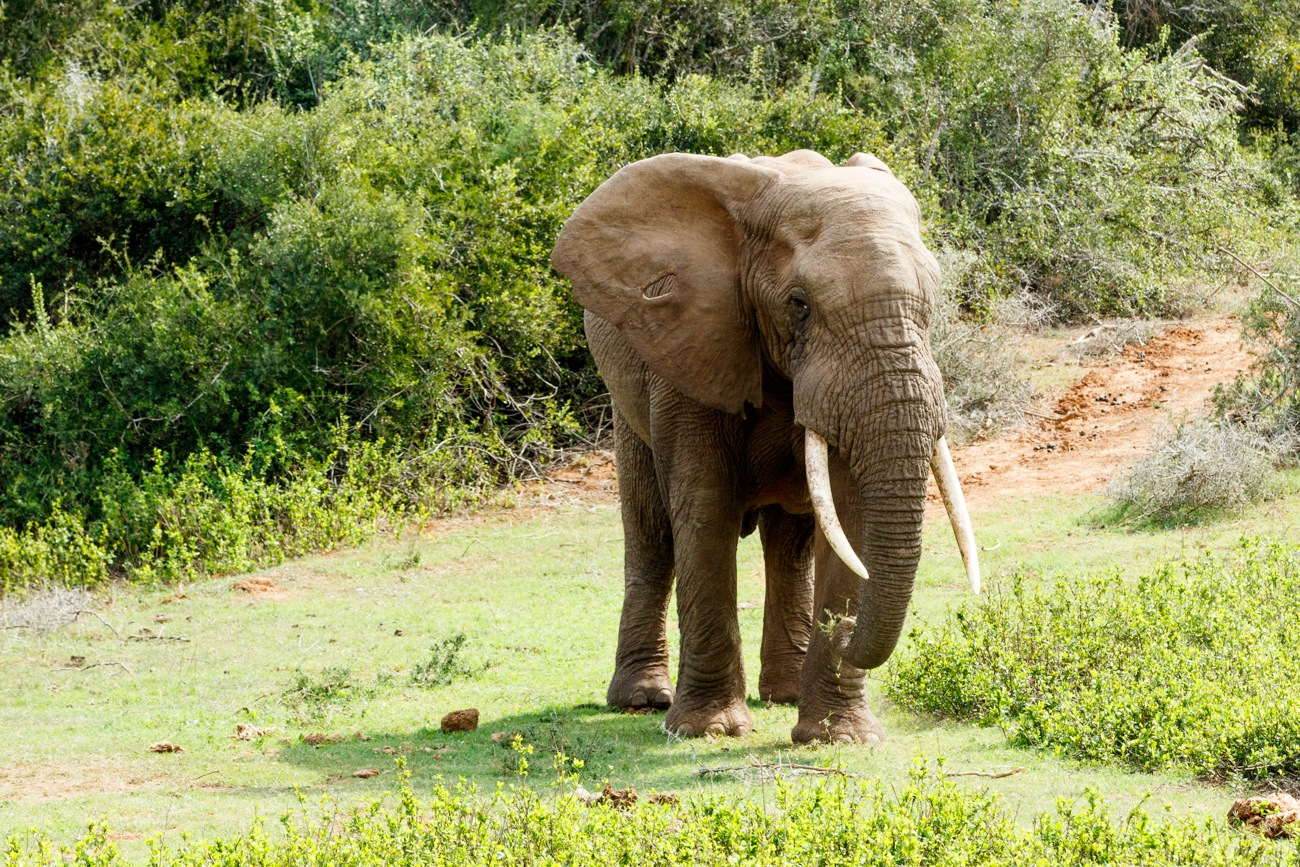 Take this side African Bush Elephant by Mark de Scande