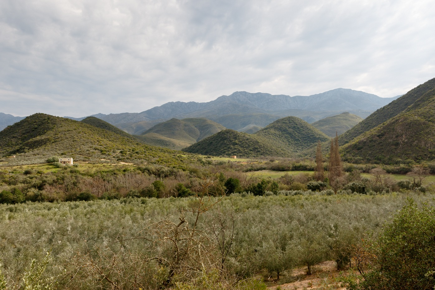 Green orchard view with mountains and moody clouds by Mark de Scande