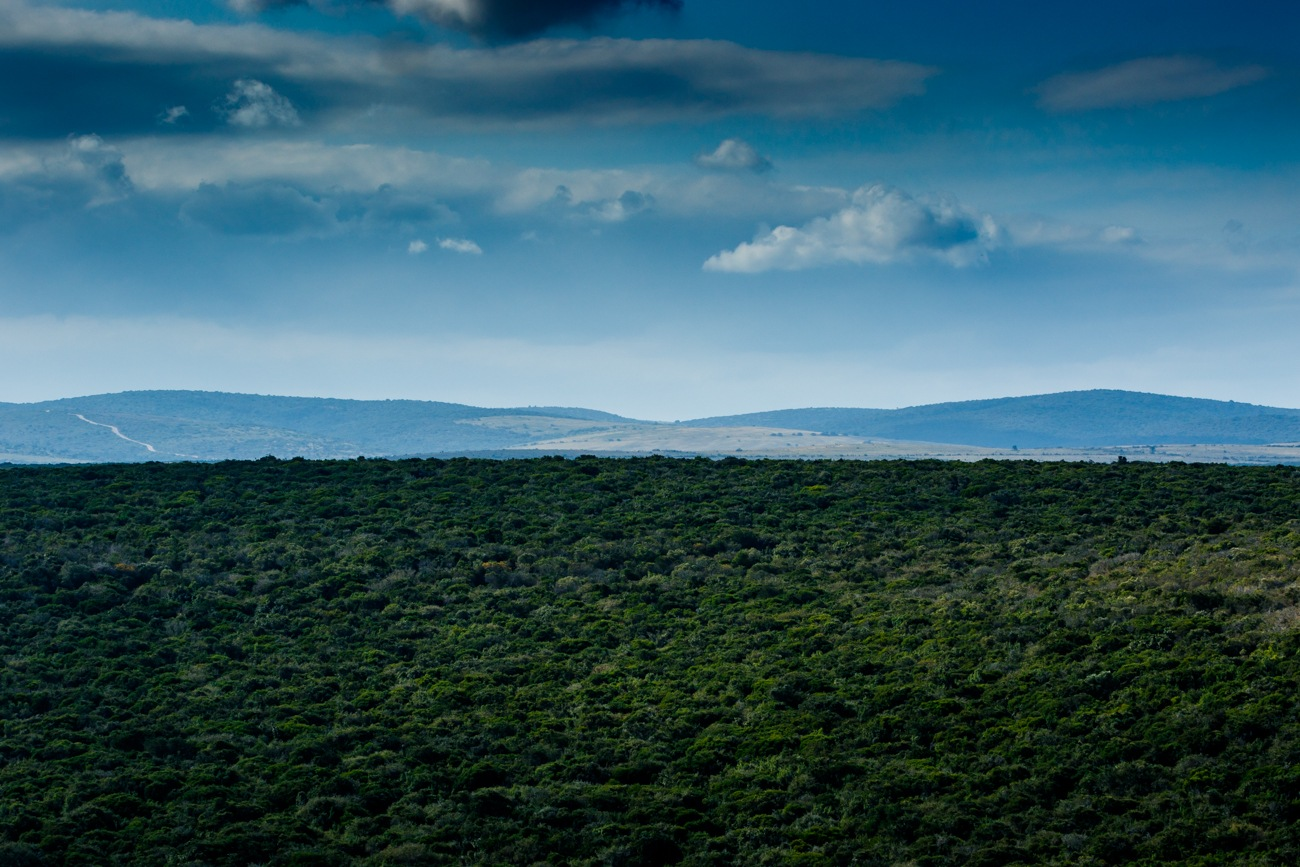 Just a beautiful Addo Landscape  by Mark de Scande