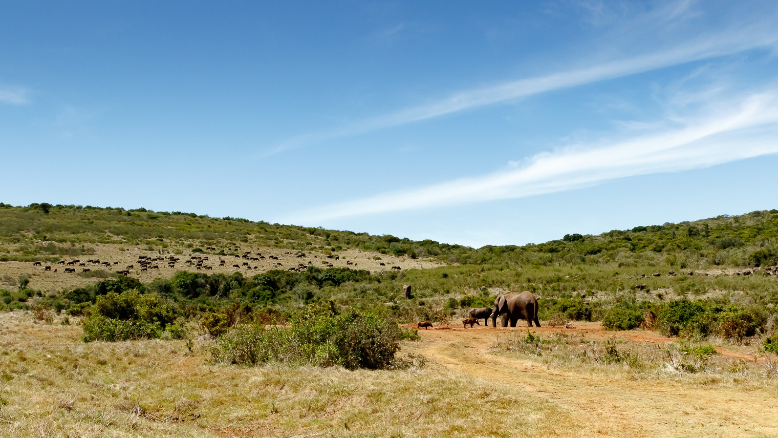 Field full of Buffaloes and elephants at the watering hole by Mark de Scande