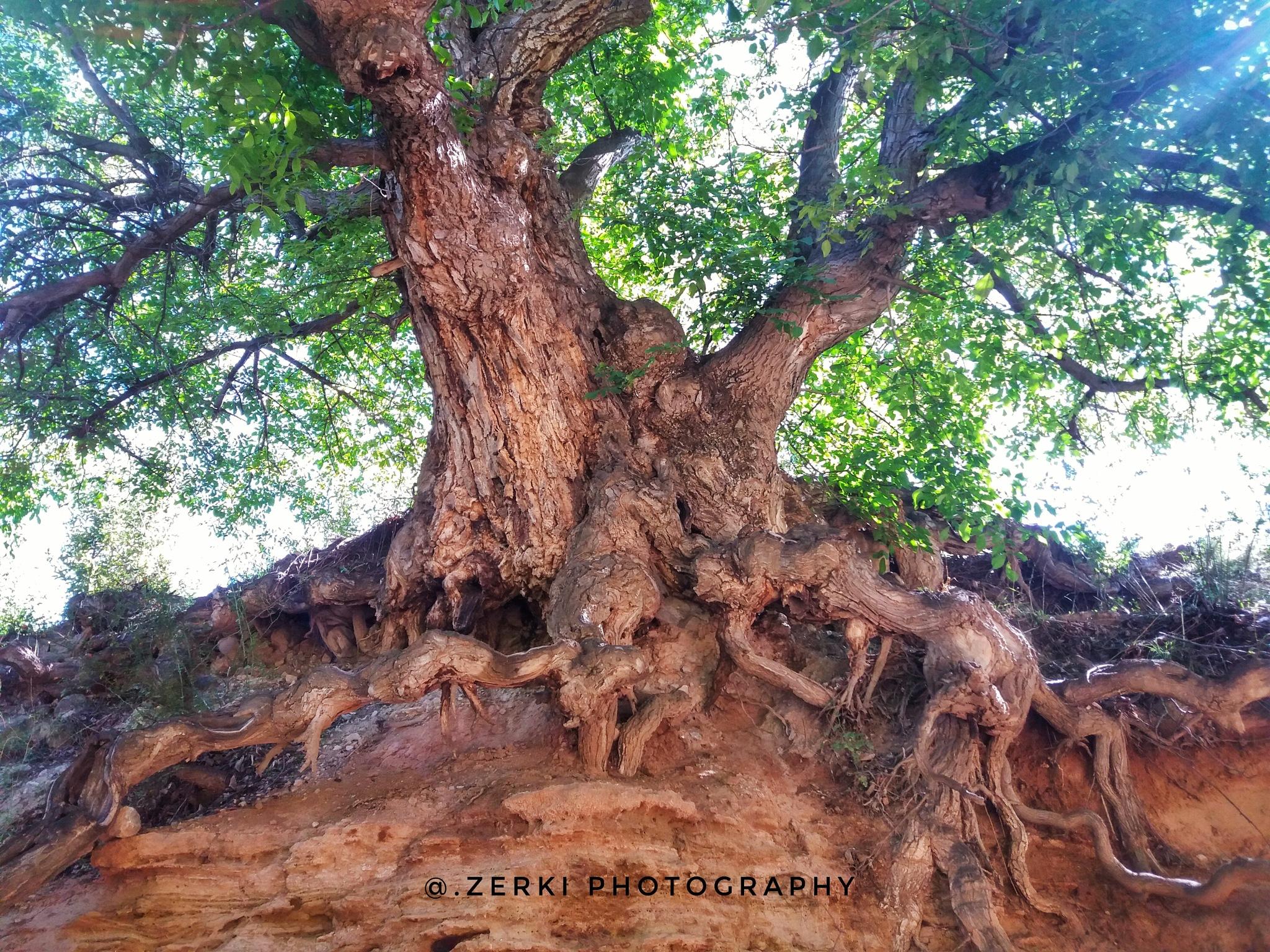 Tree by Adil Zerki