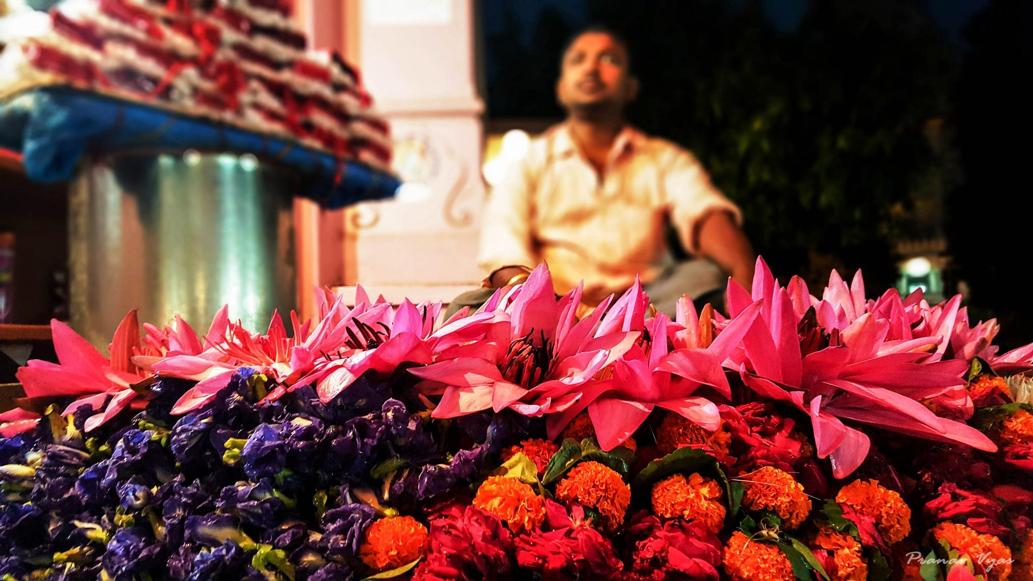 Lotuses by Pranav Vyas