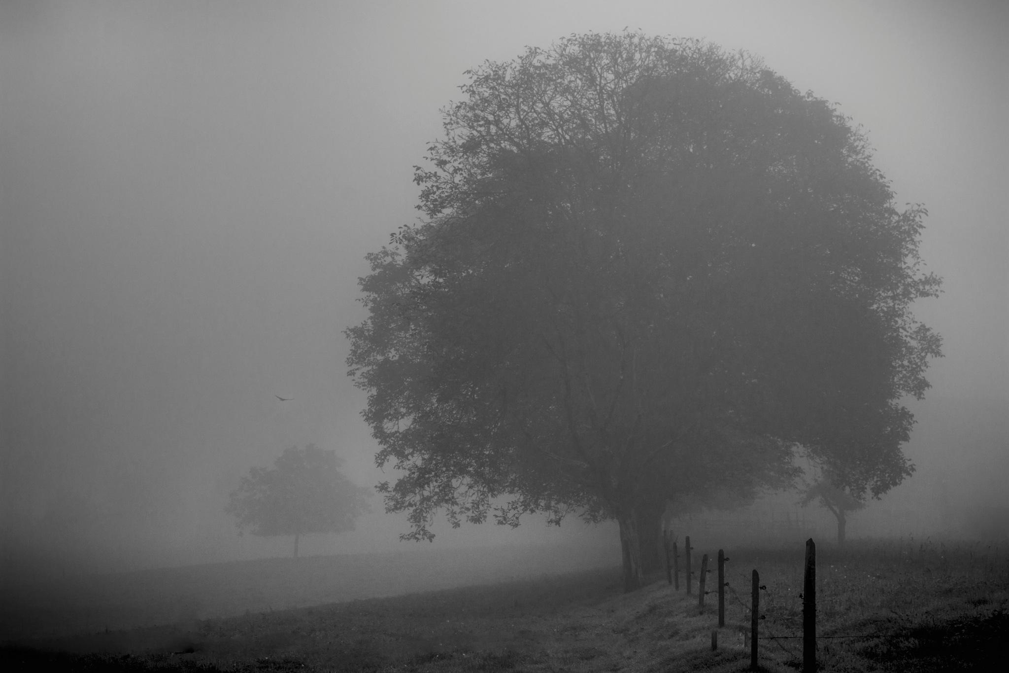 faded trees by John Palmer