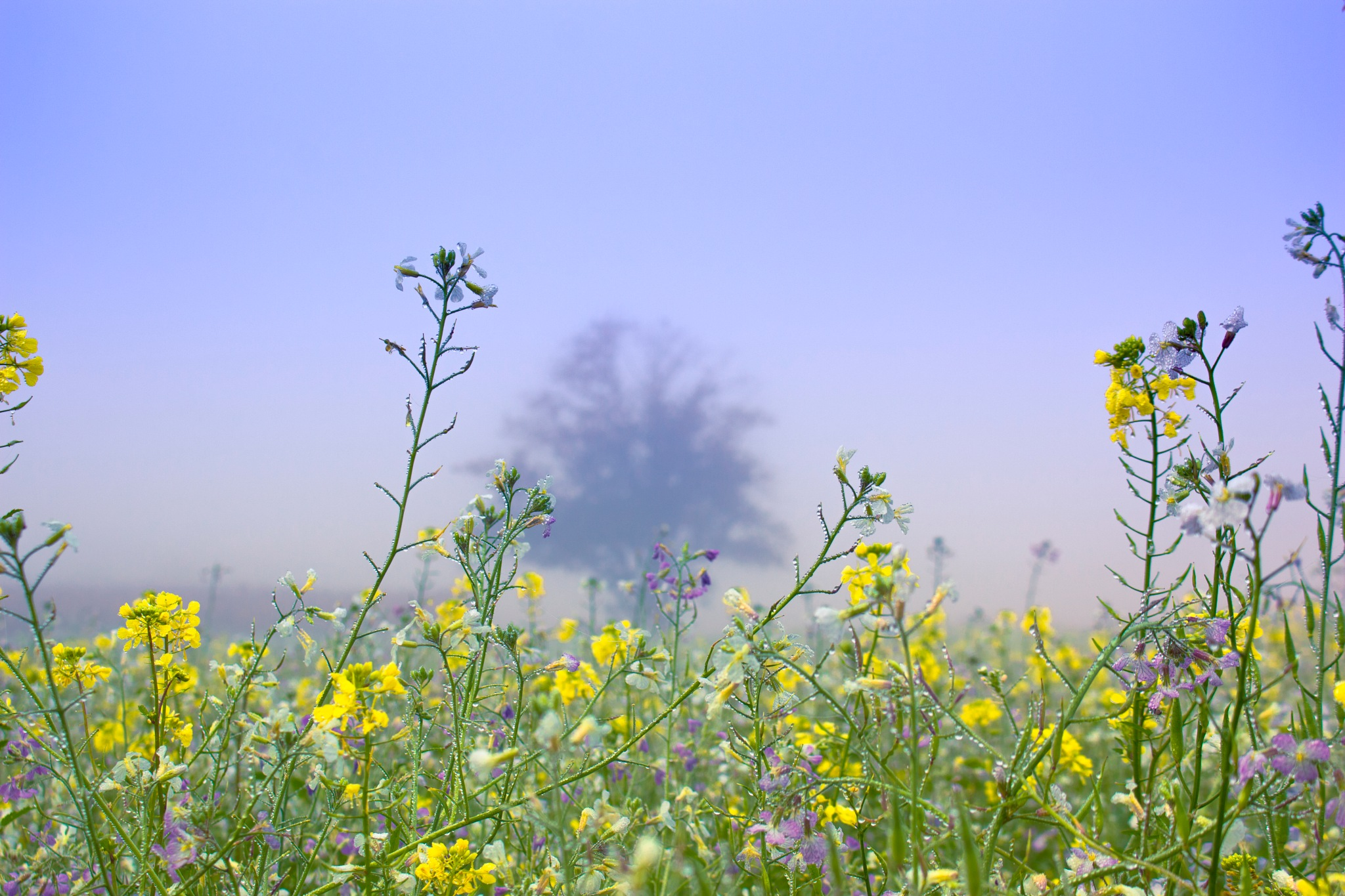 Misty colour fields  by John Palmer