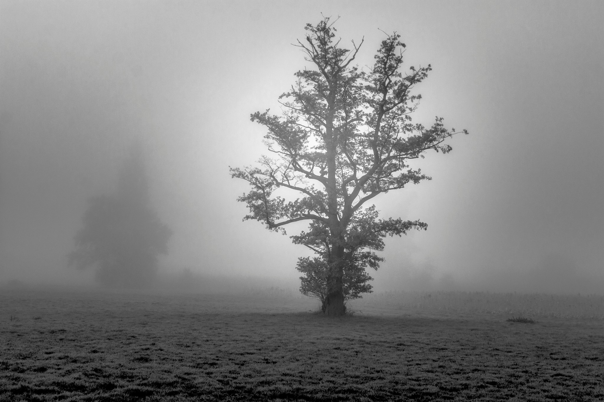 trees in the mist by John Palmer
