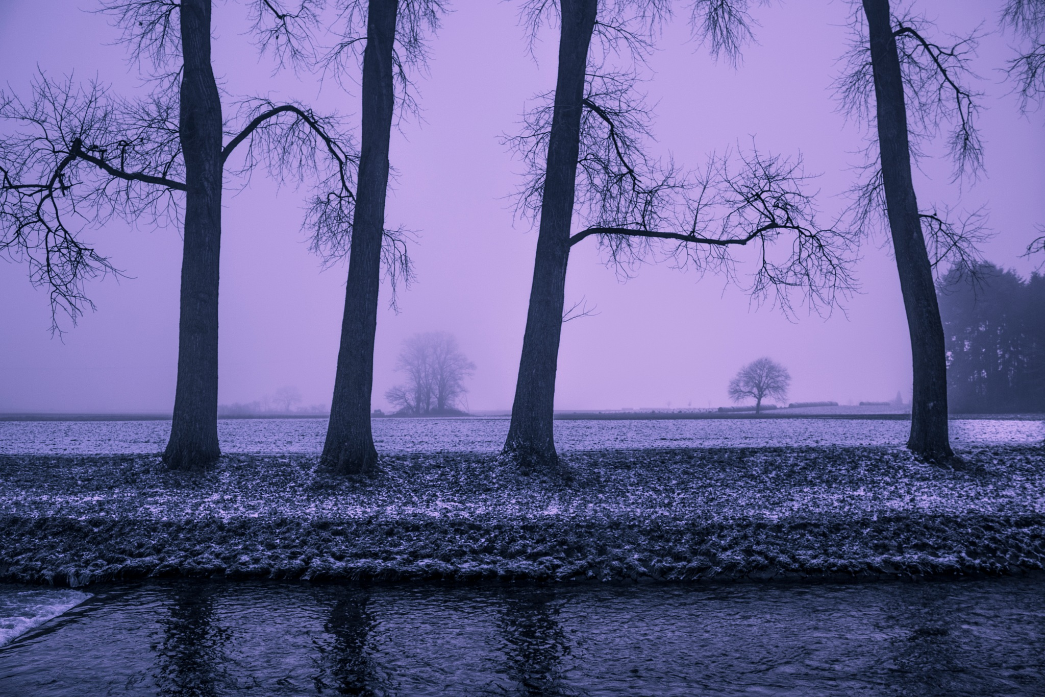 trees by the river by John Palmer