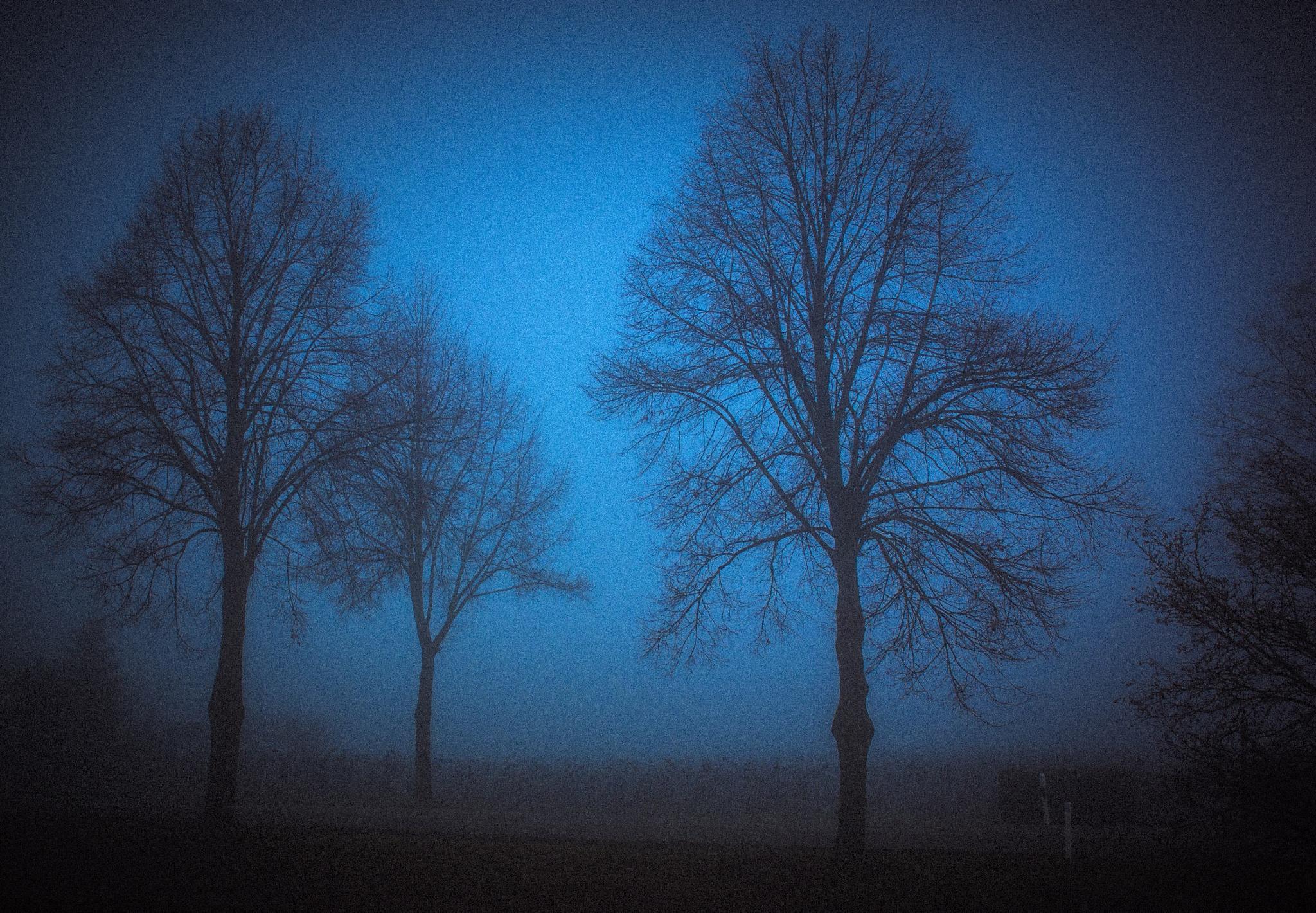 faint trees by John Palmer