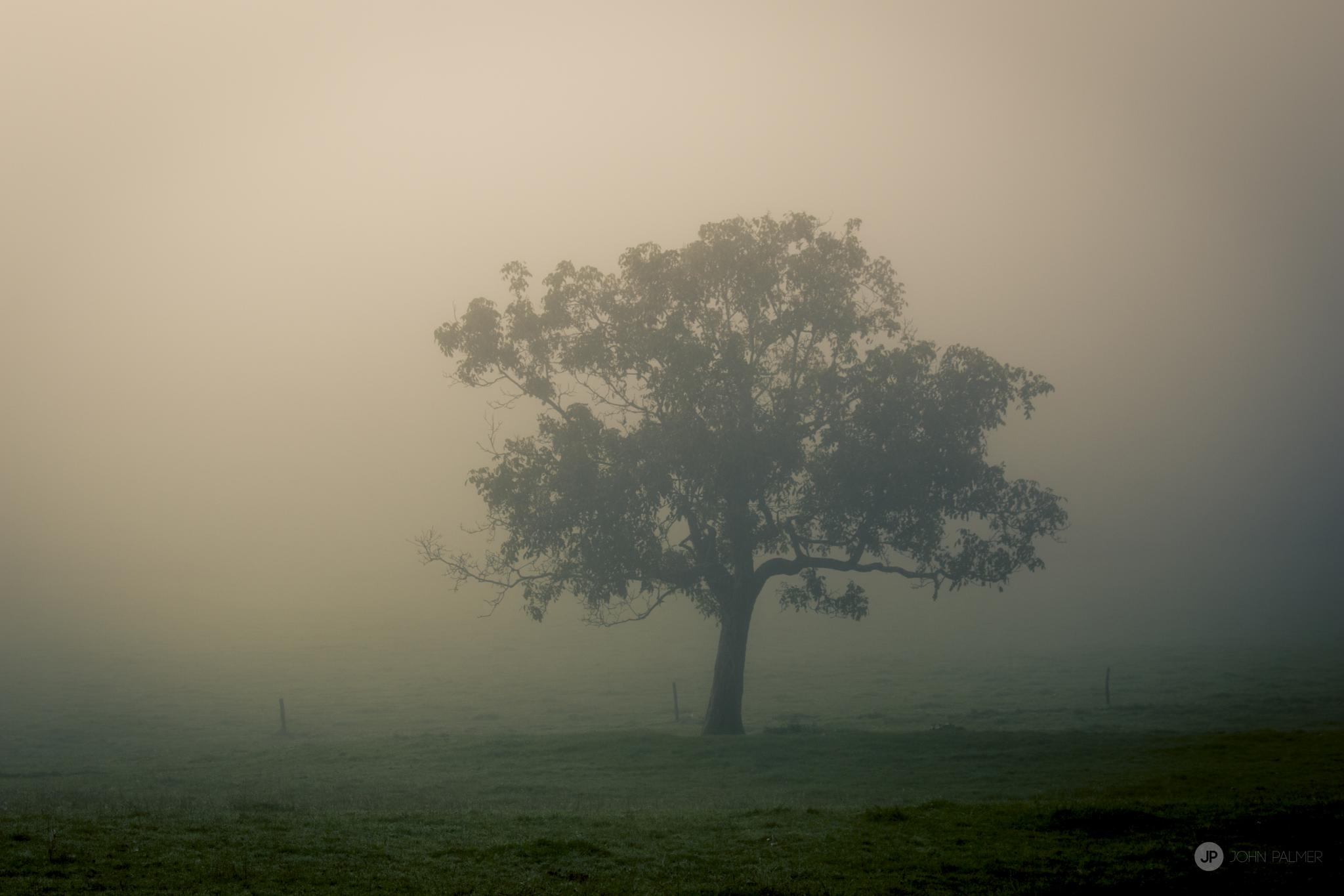 lonely tree by John Palmer