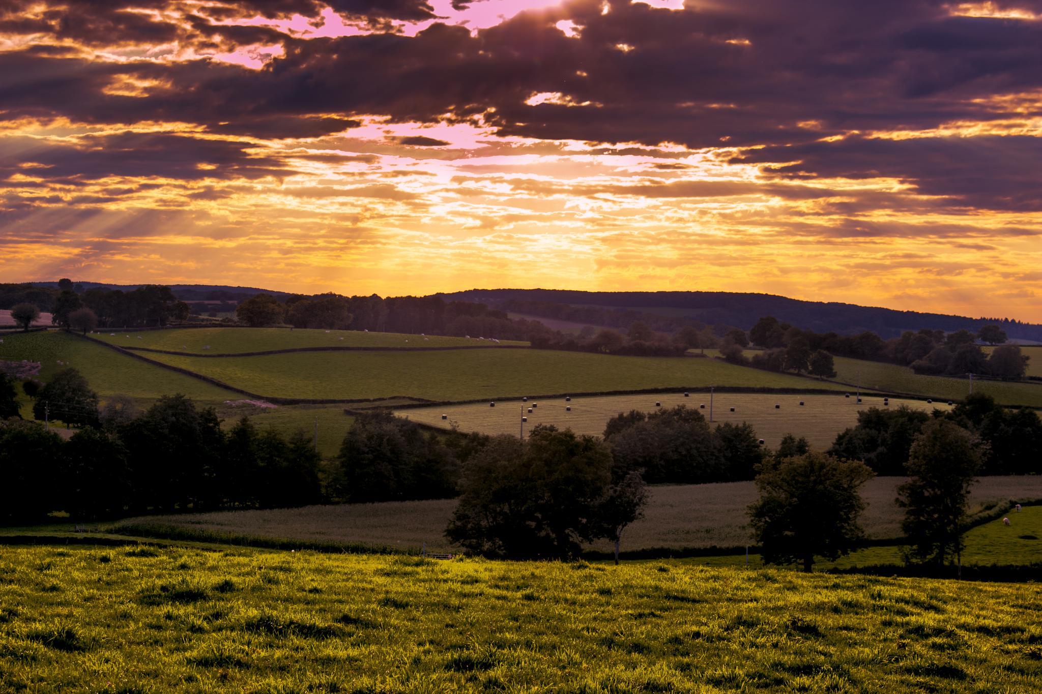 across the fields   by John Palmer