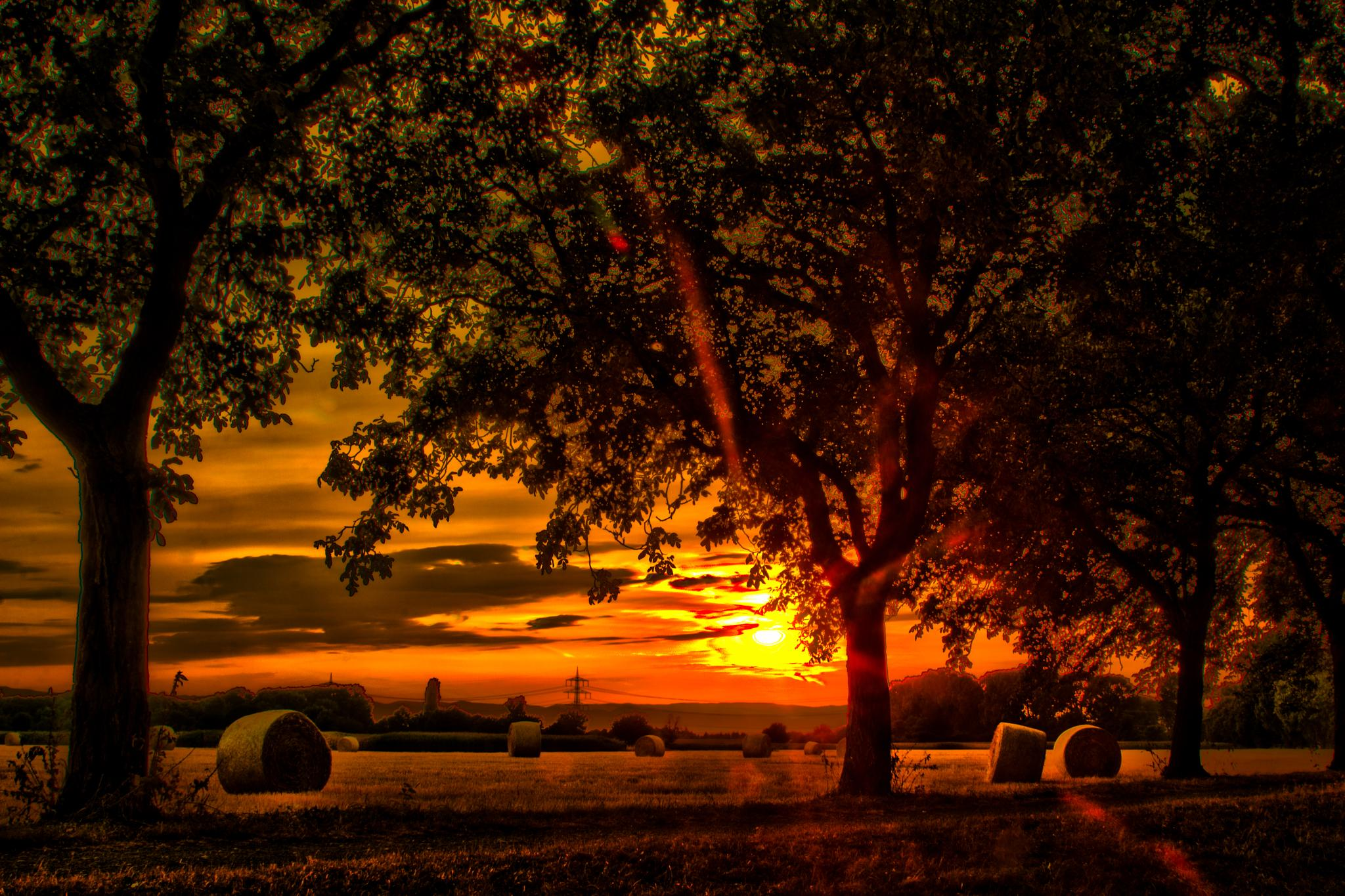 deep reds at sunset  by John Palmer