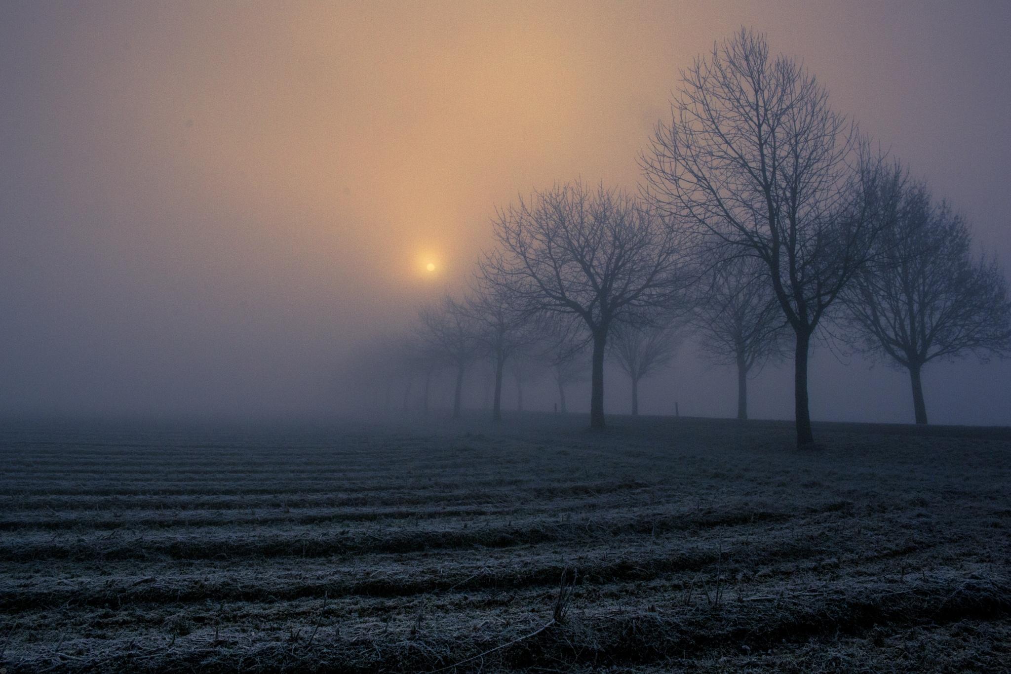 distant sun by John Palmer