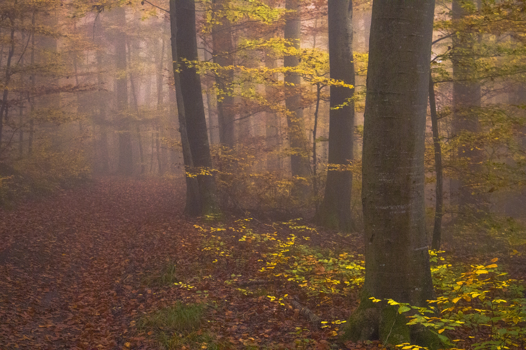 leafy way by John Palmer