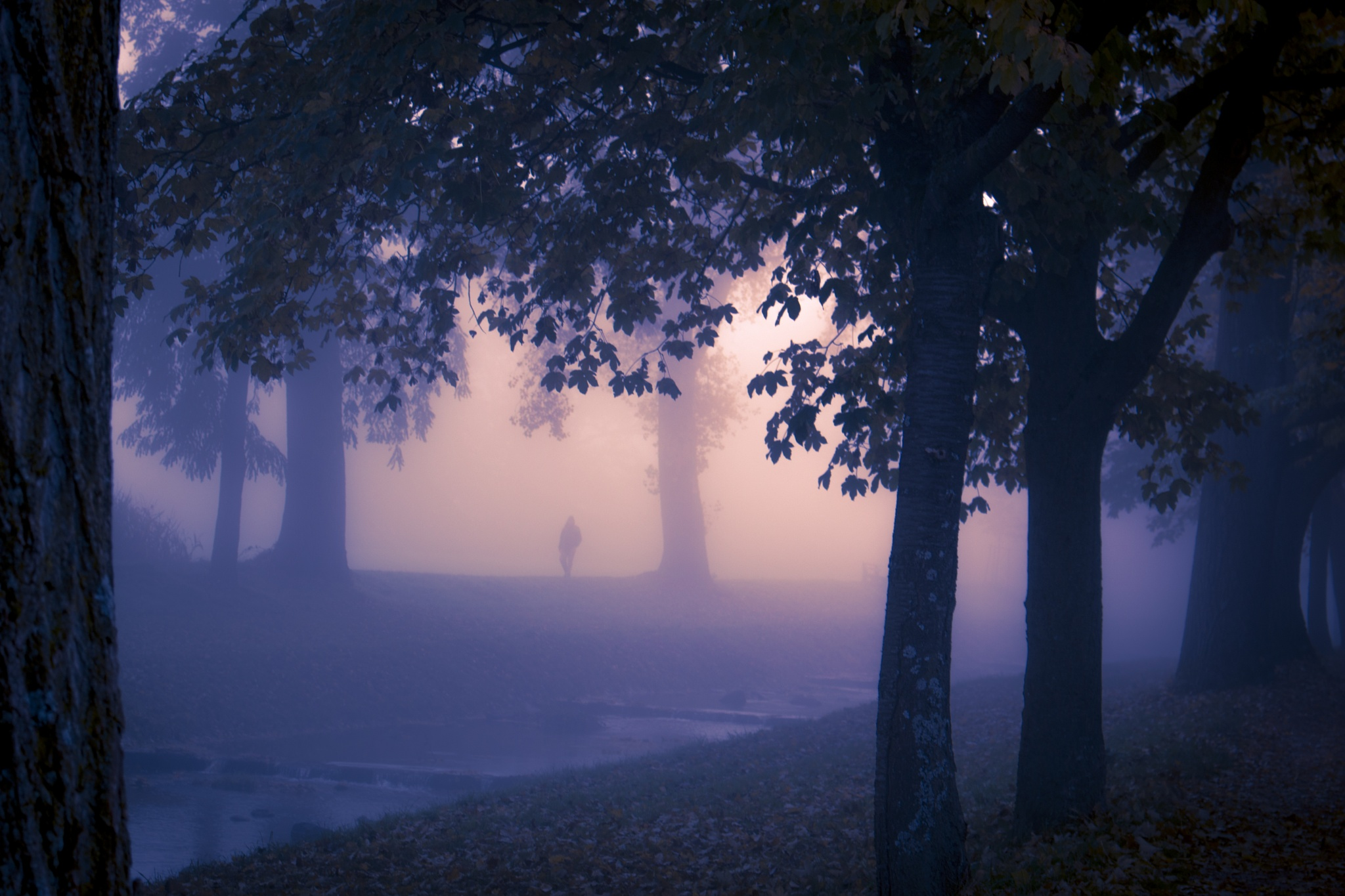 man in the mist by John Palmer
