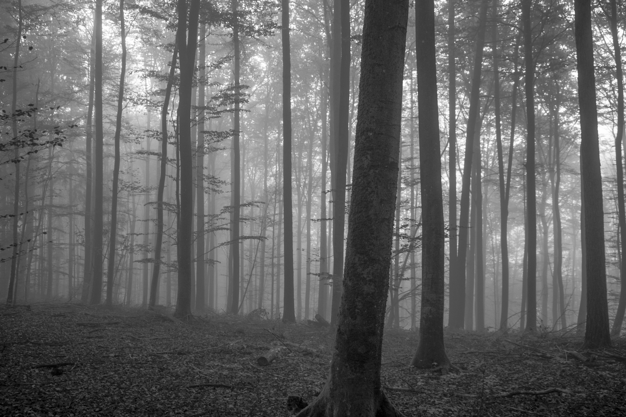 forest by John Palmer