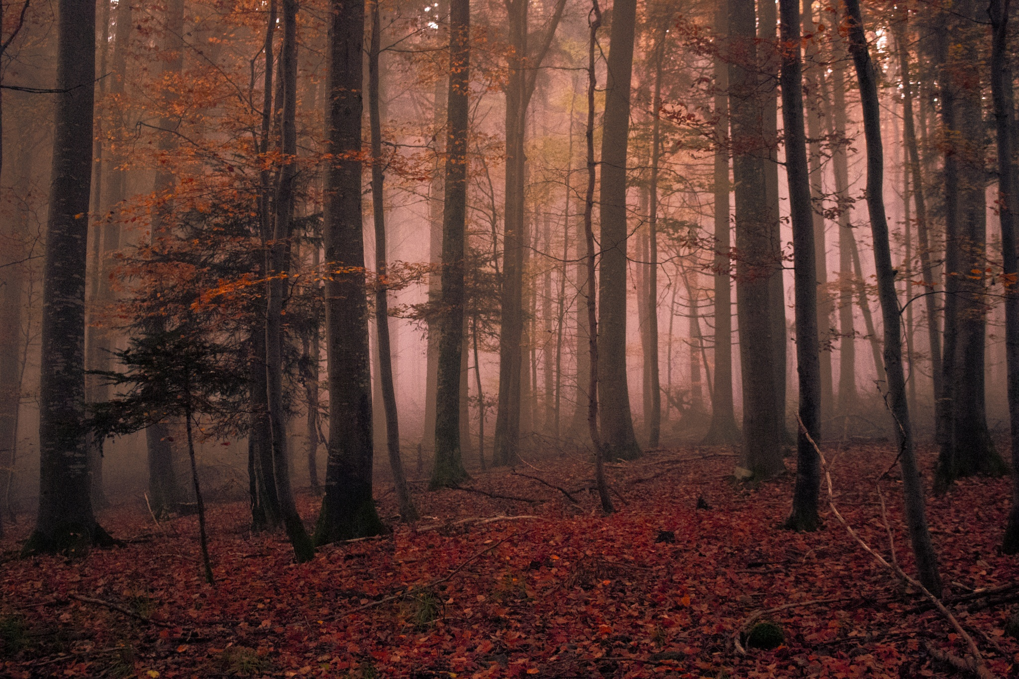 Black Forest by John Palmer