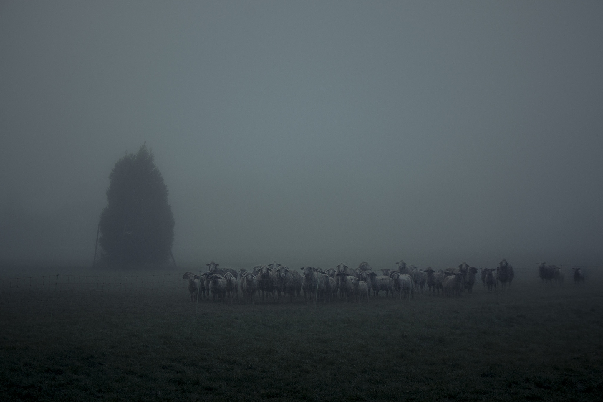 sheep by John Palmer