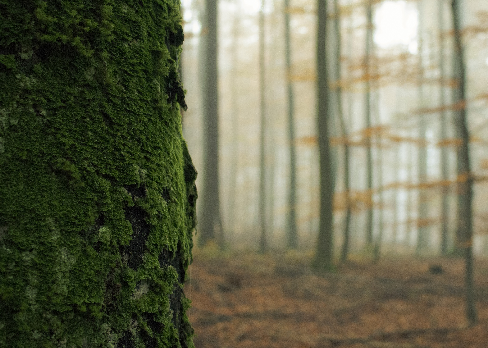 moss by John Palmer