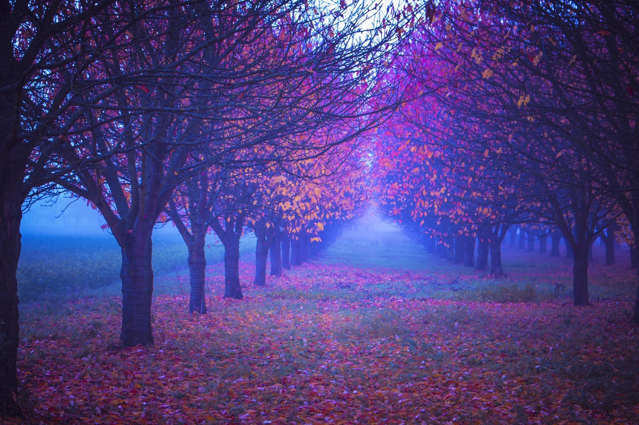misty trees by John Palmer