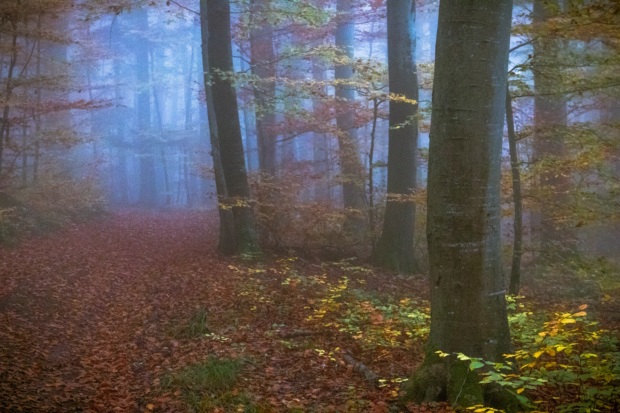misty forest by John Palmer