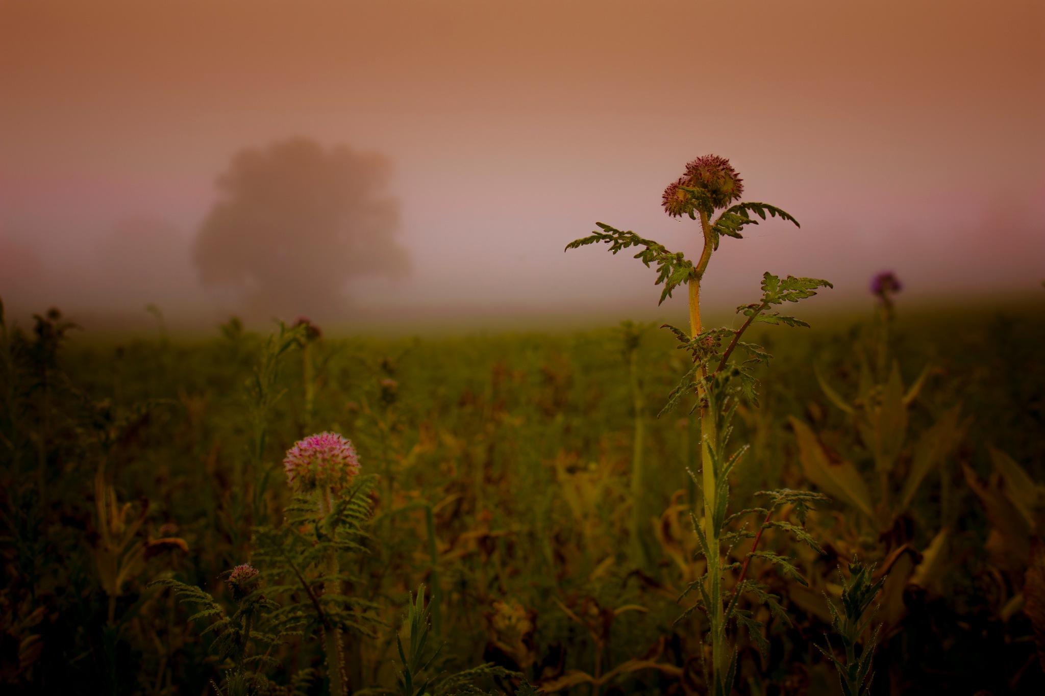 late October mist by John Palmer