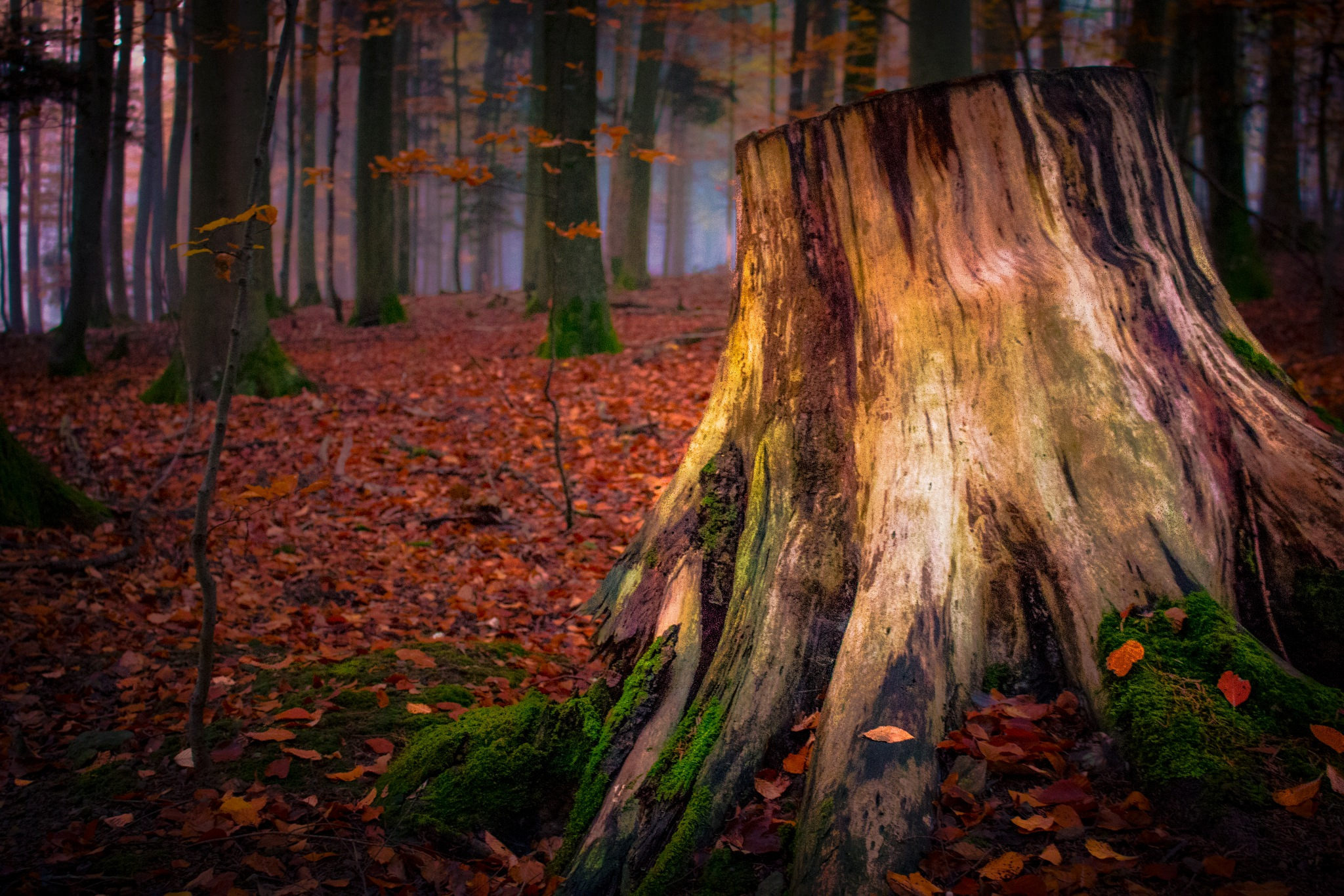 in the Black Forest by John Palmer