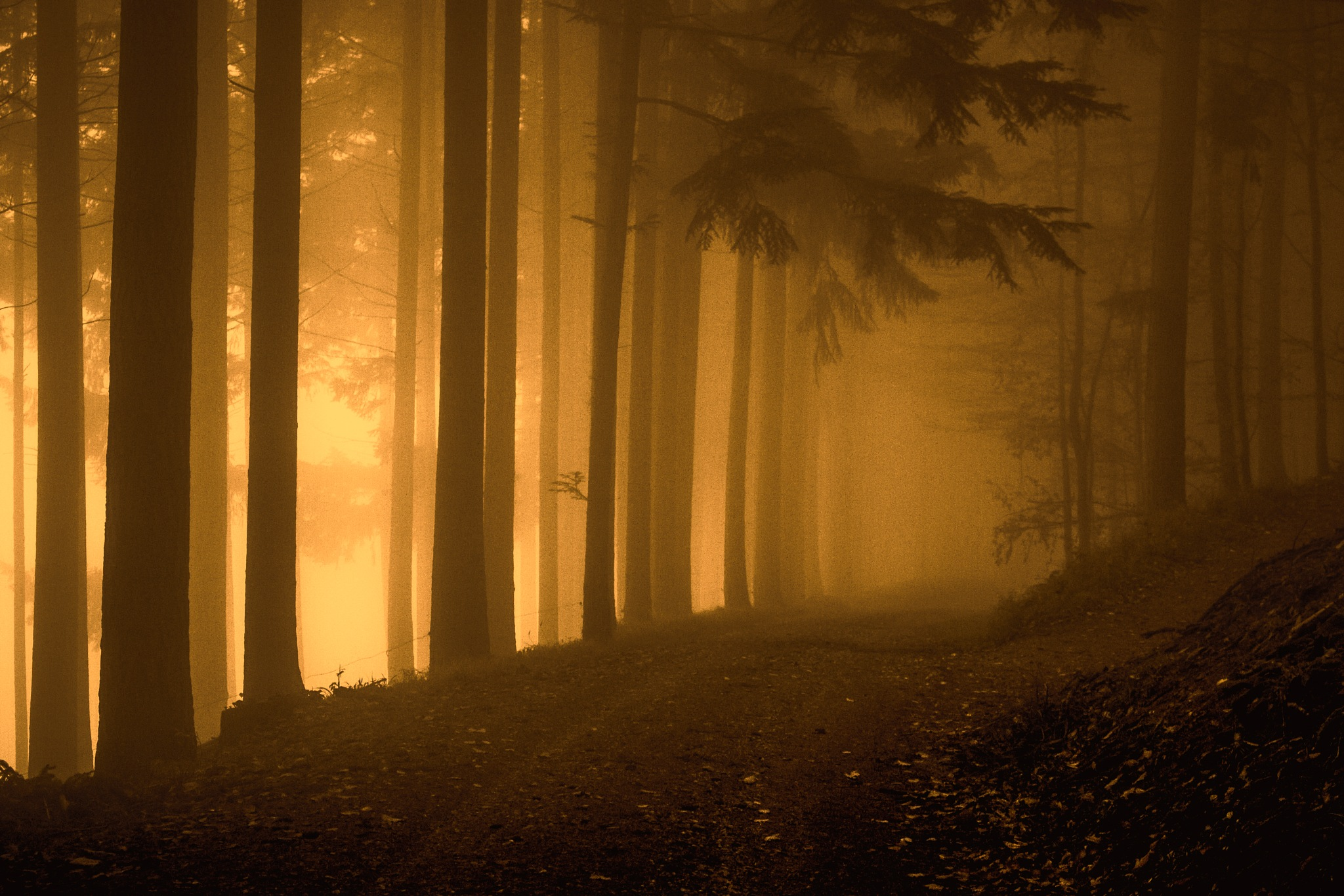 Forest trail by John Palmer