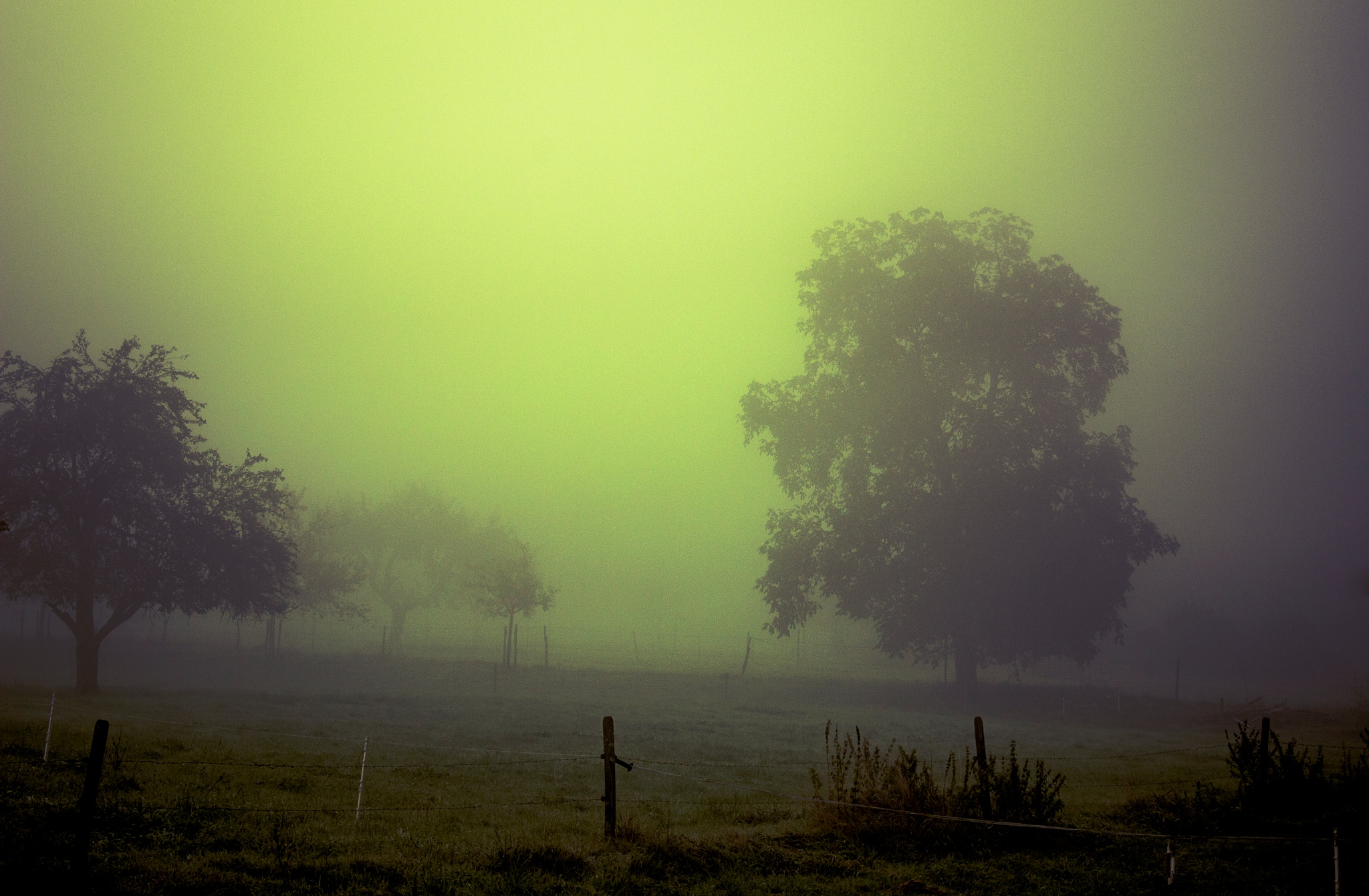 misty by John Palmer