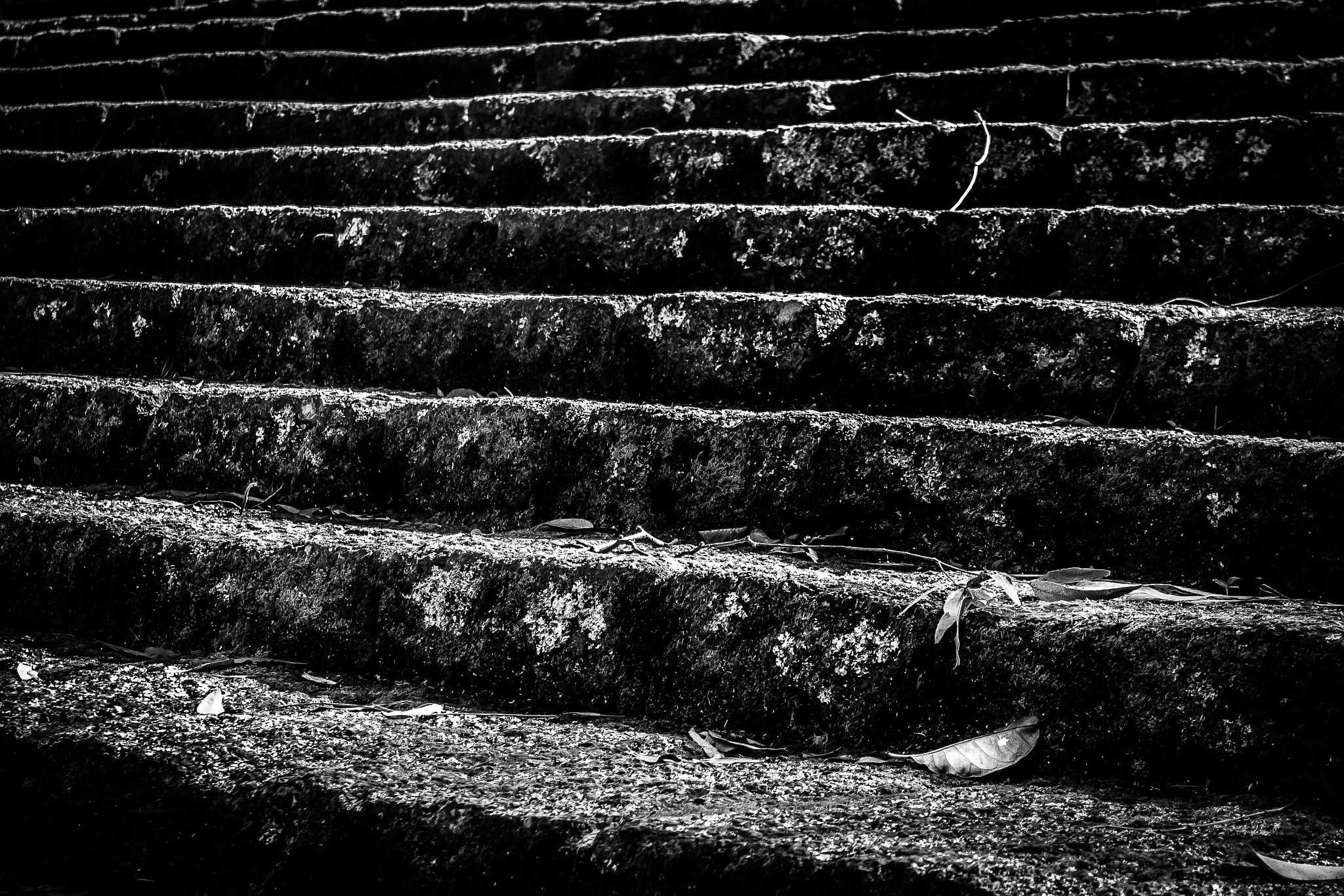 Undisturbed steps by Paul Tuckley
