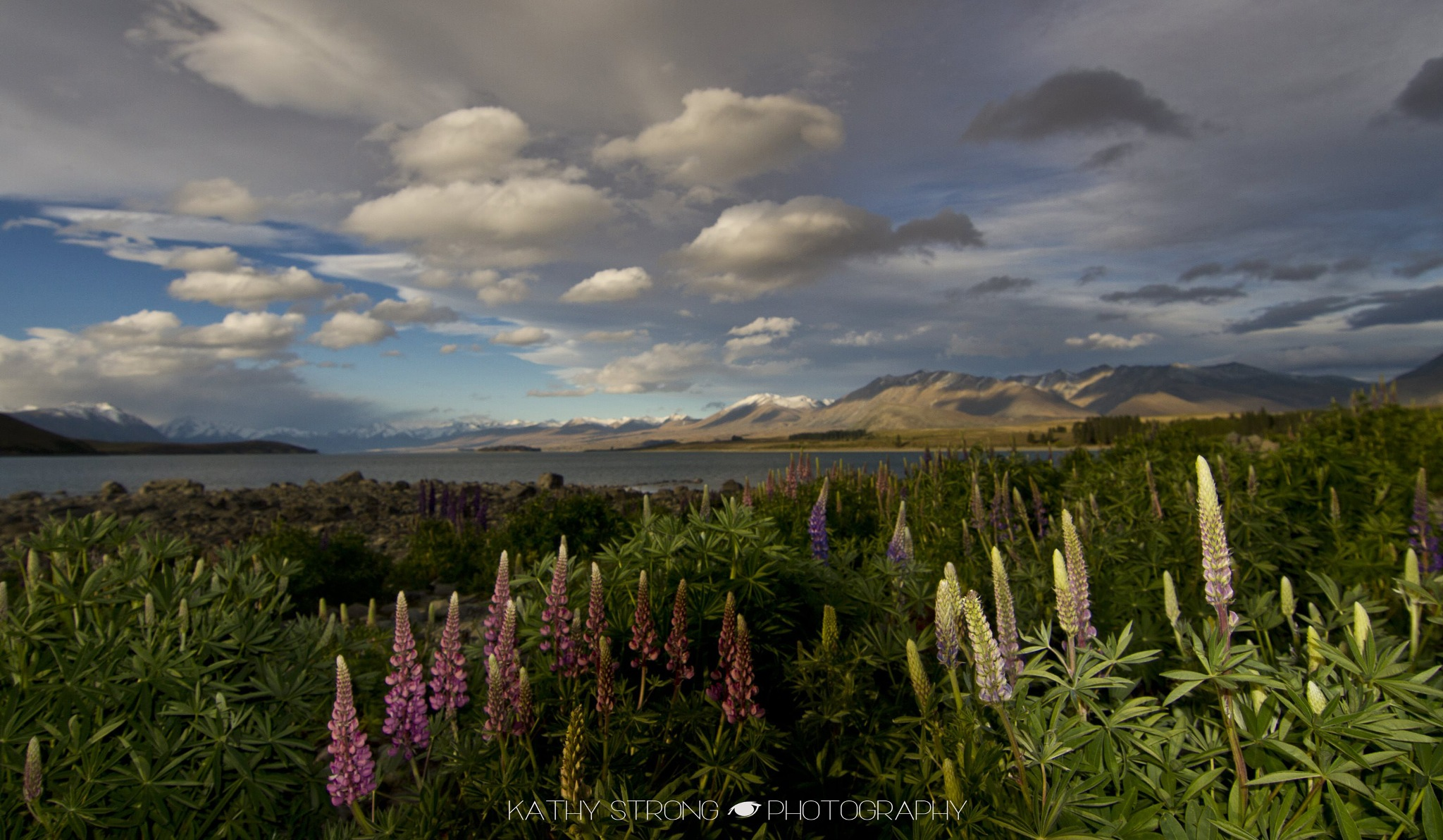 Lupins at Lake Tekapo New Zealand by Kathy Strong