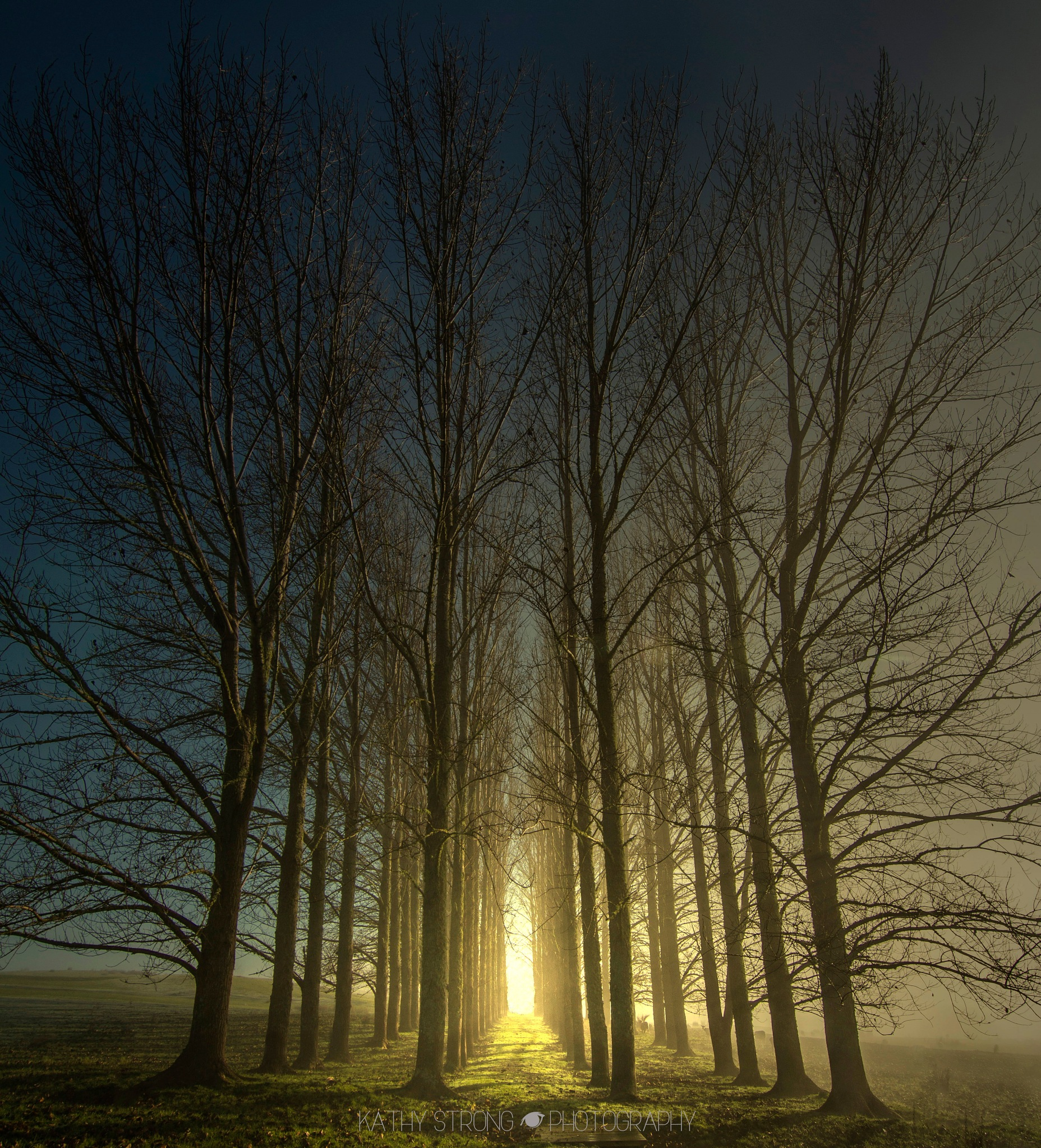 Tall Trees by Kathy Strong