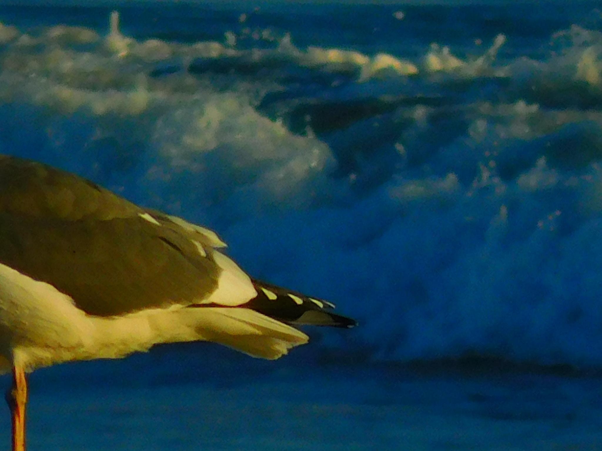 WILD HOGBIRD DOZING...(GMO CHIMERA--Shocking 'Proof Of Escape' / Coast-Capture Snapshot) by SEYMOUR_NAO