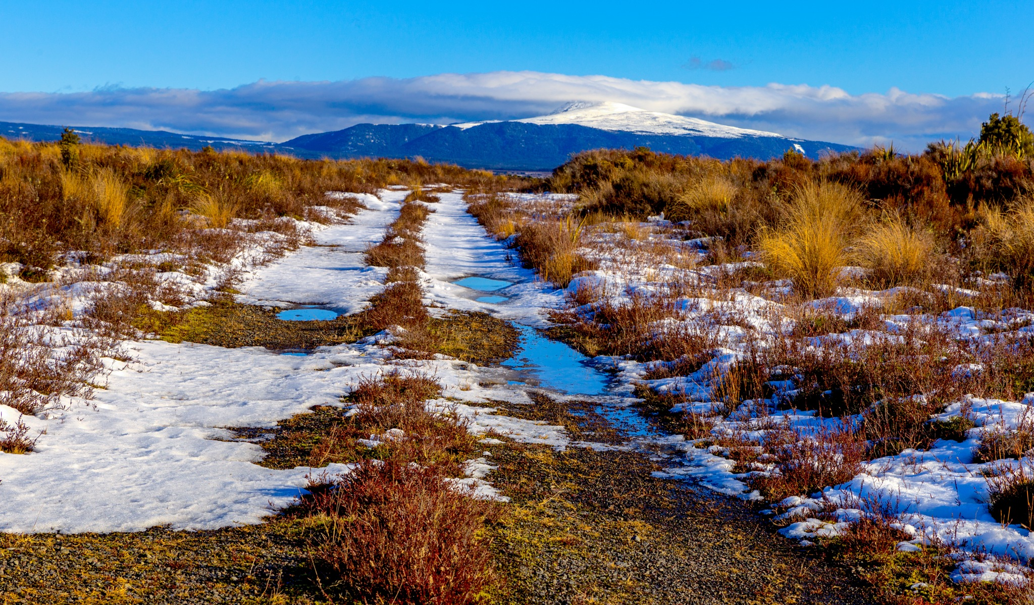 Tussock Road by AnnekaBarrittphotographyNZ