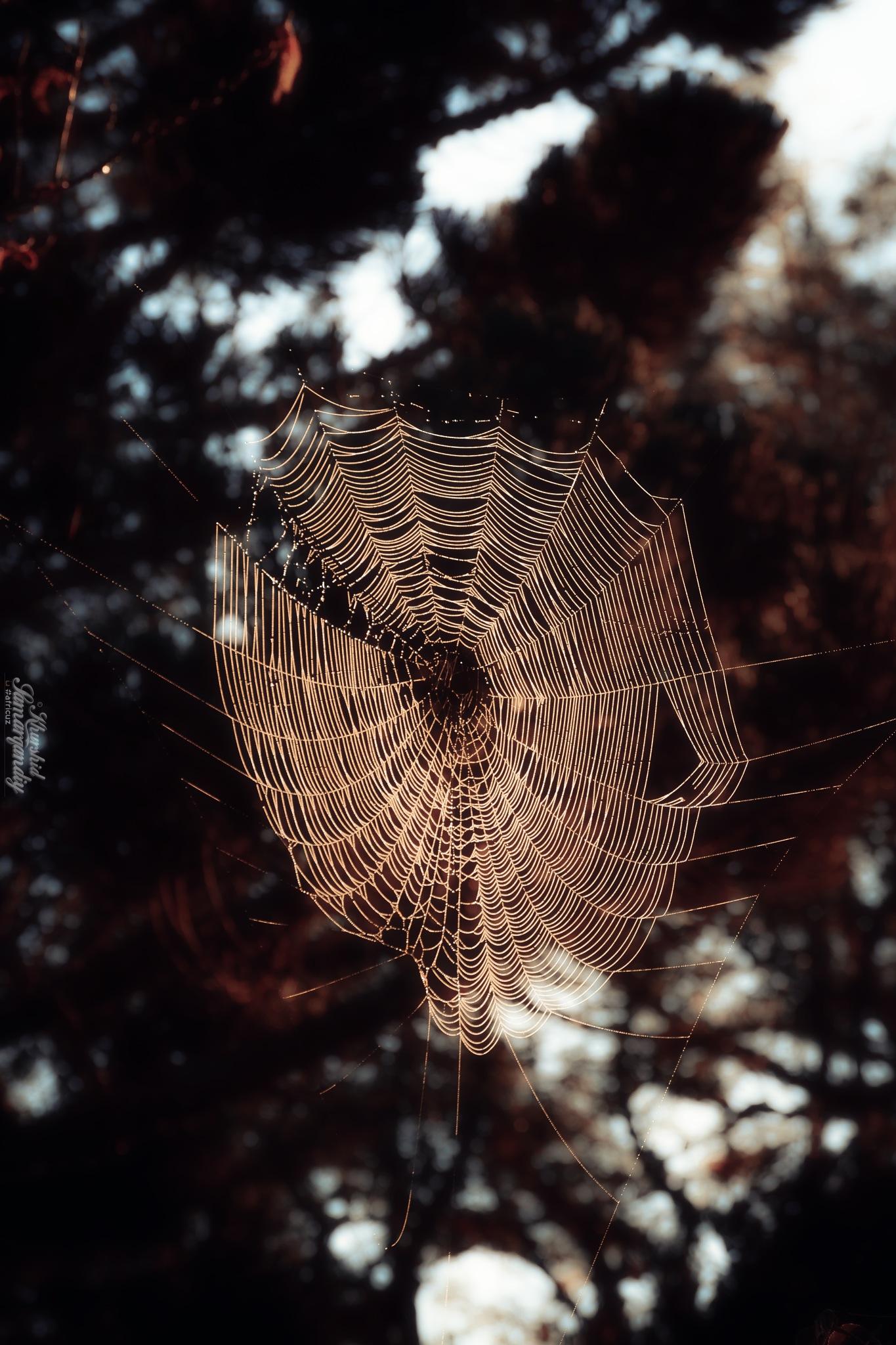 Spider Web by Khurshid Samarqandiy (Dustmurodov)