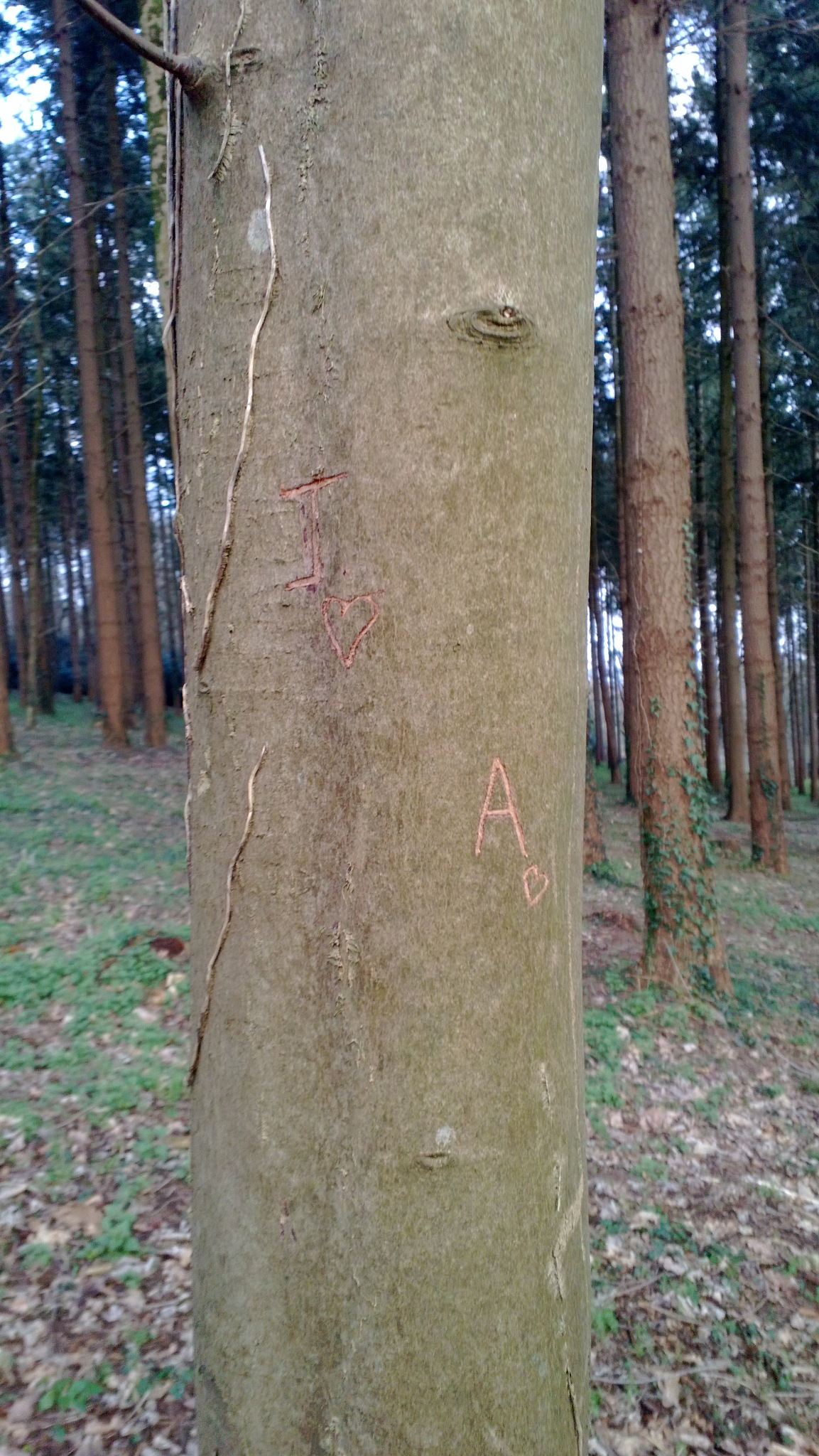 love tree by Allan Boulo