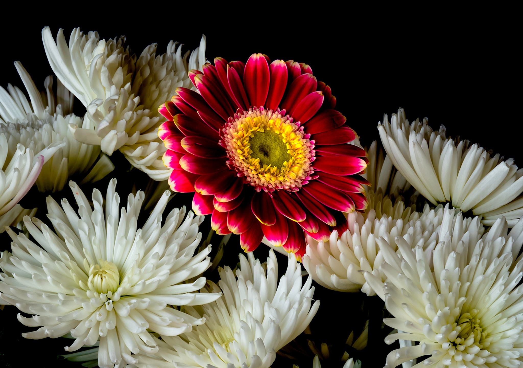 Red Gerbera and White Chrysanthemums by John Roberts