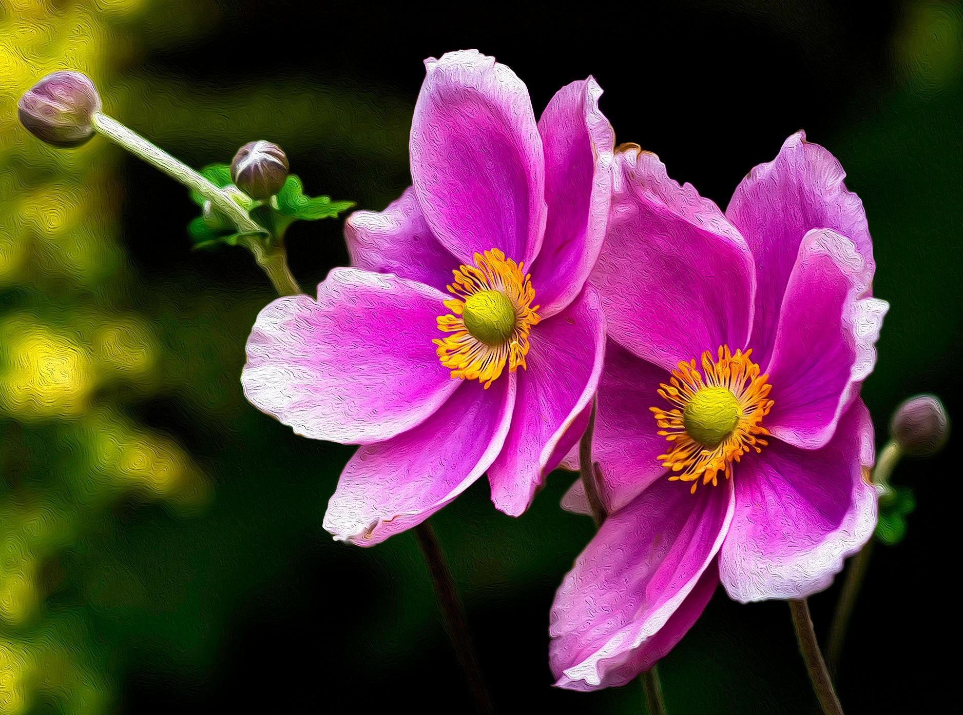 Japanese Anemones by John Roberts