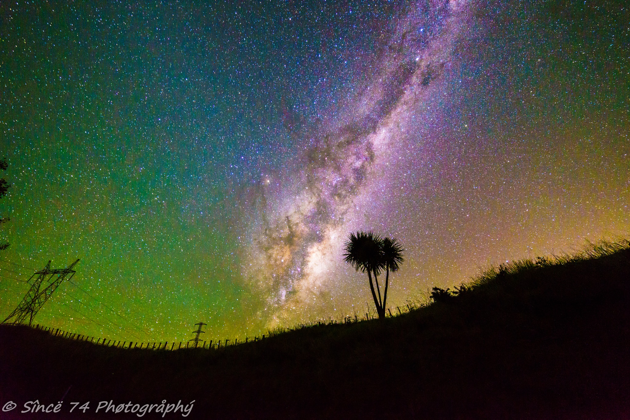 Cabbage tree milky by Since 74 Photography
