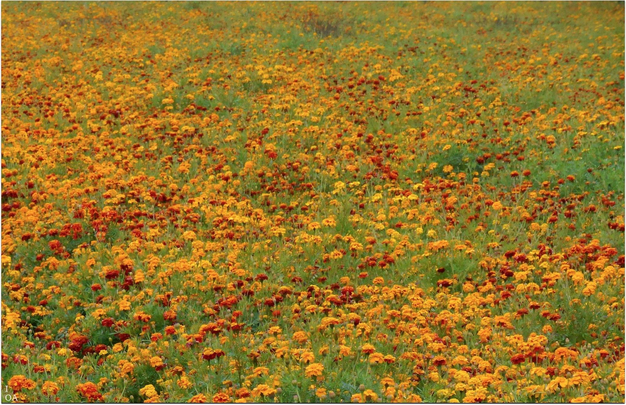 Flowers in the field by imageofantwerp