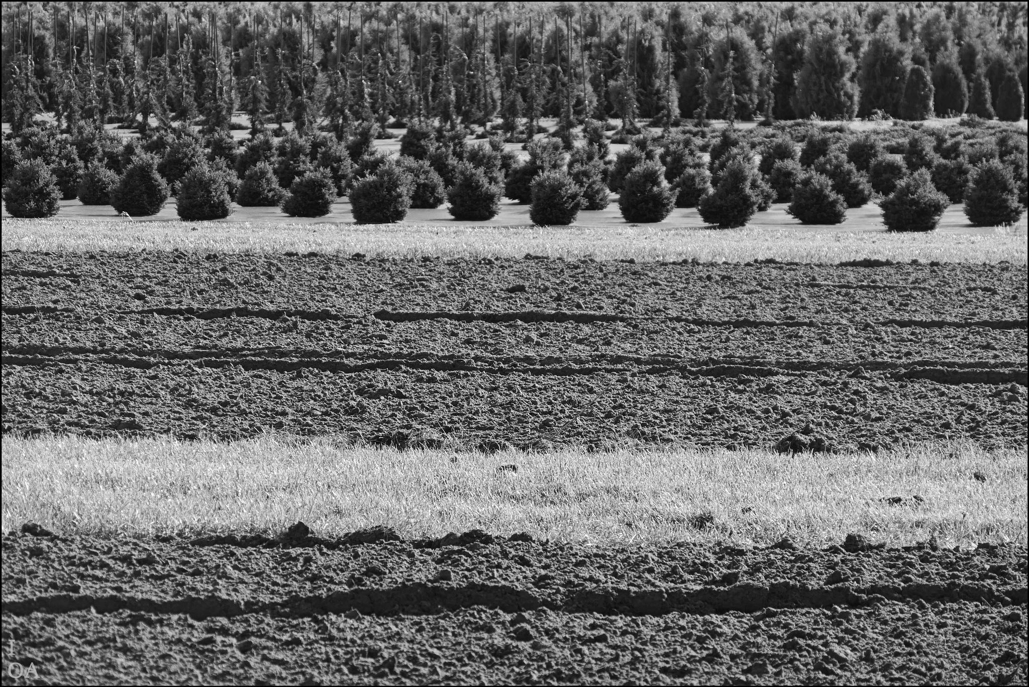 Tree grower by imageofantwerp