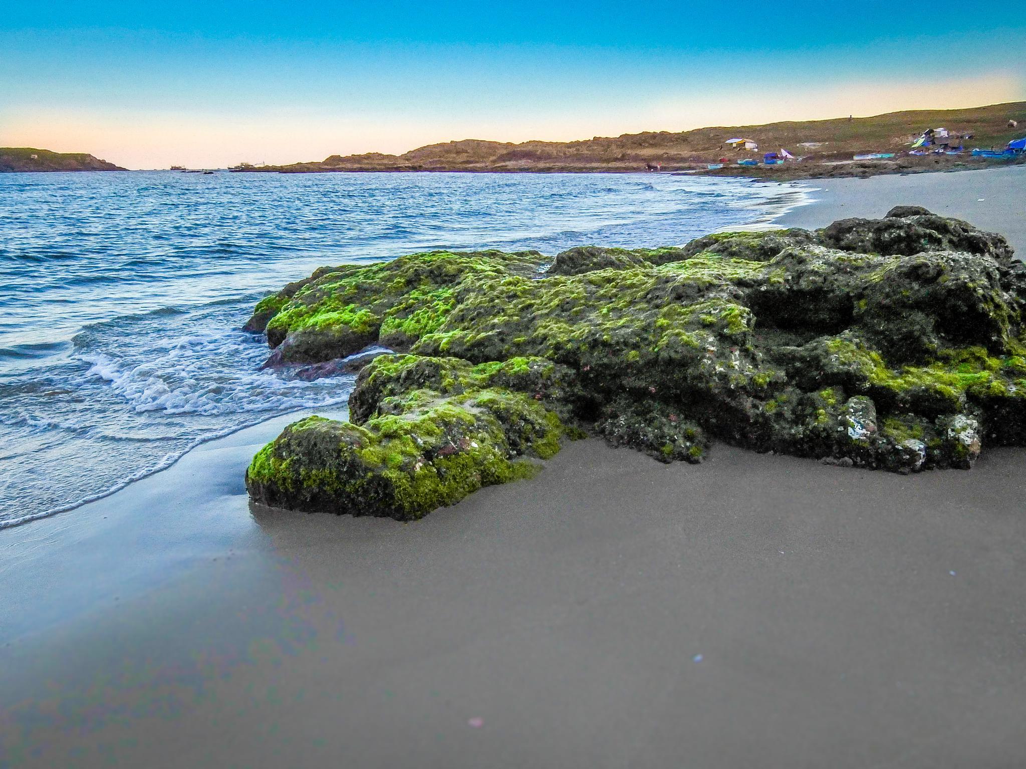 Photo in Landscape #beach #seashore #moss #rock #water