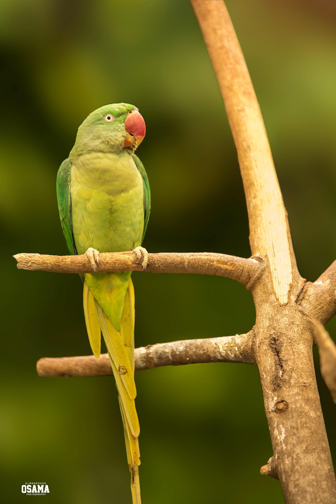 Beautiful bird by osama almngush