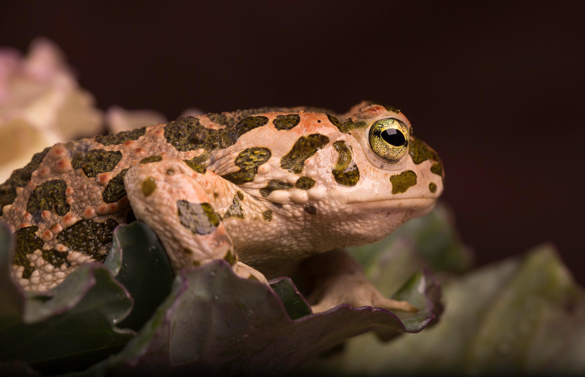 frog by osama almngush
