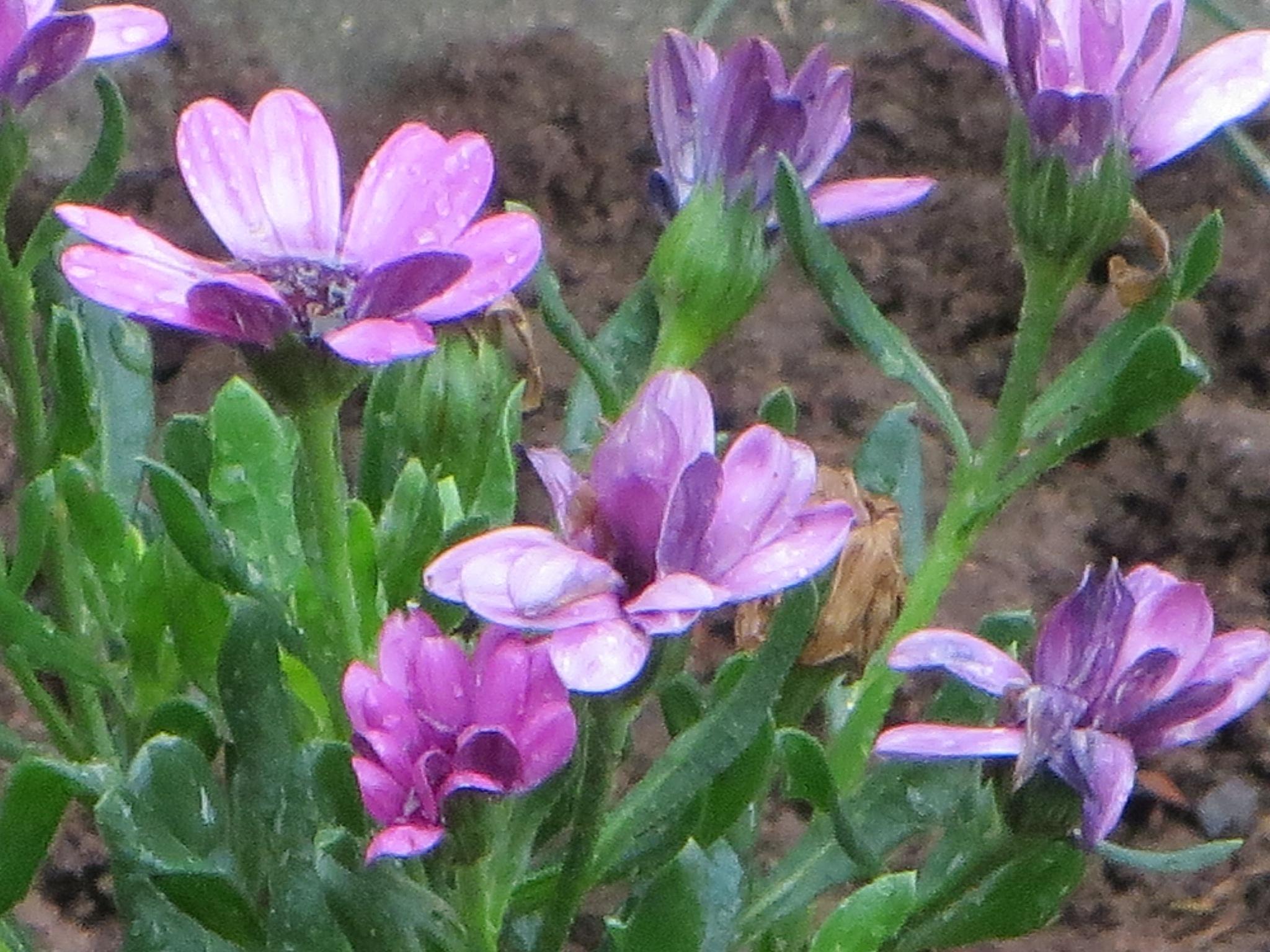 flowers by kamelk