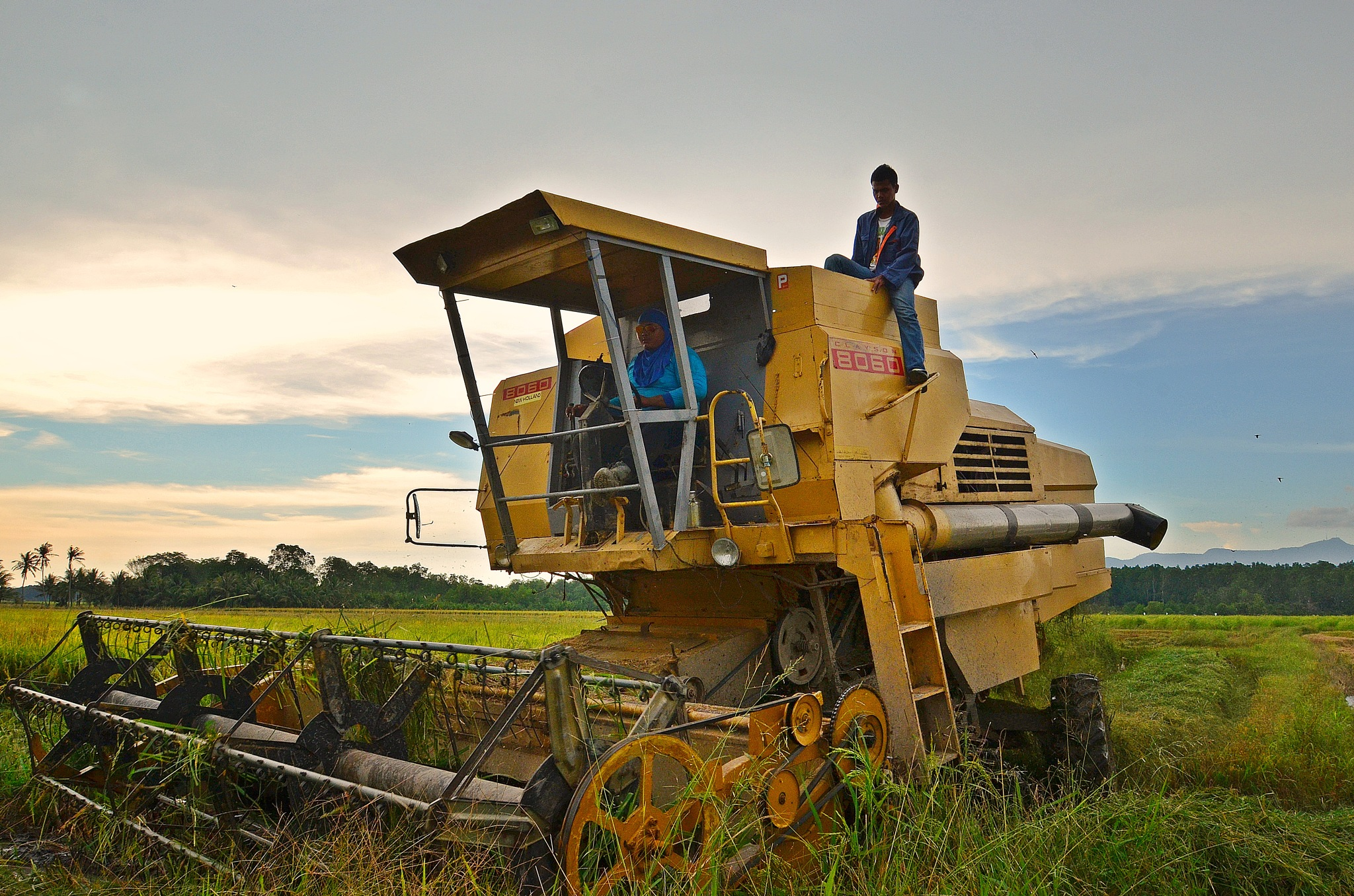 Paddy Harvesting by FarizMahmood