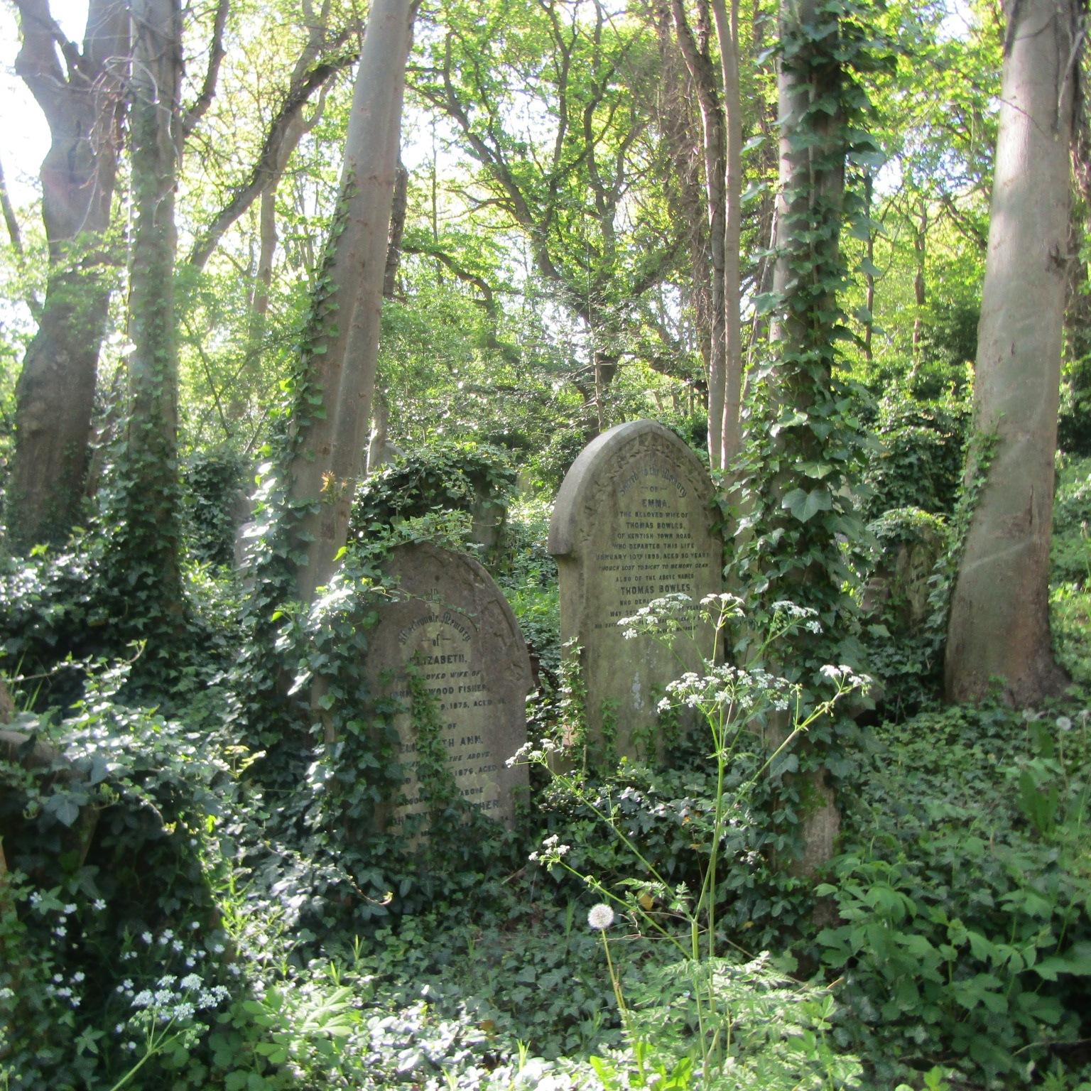 Forgotten graves  by Sima Janan