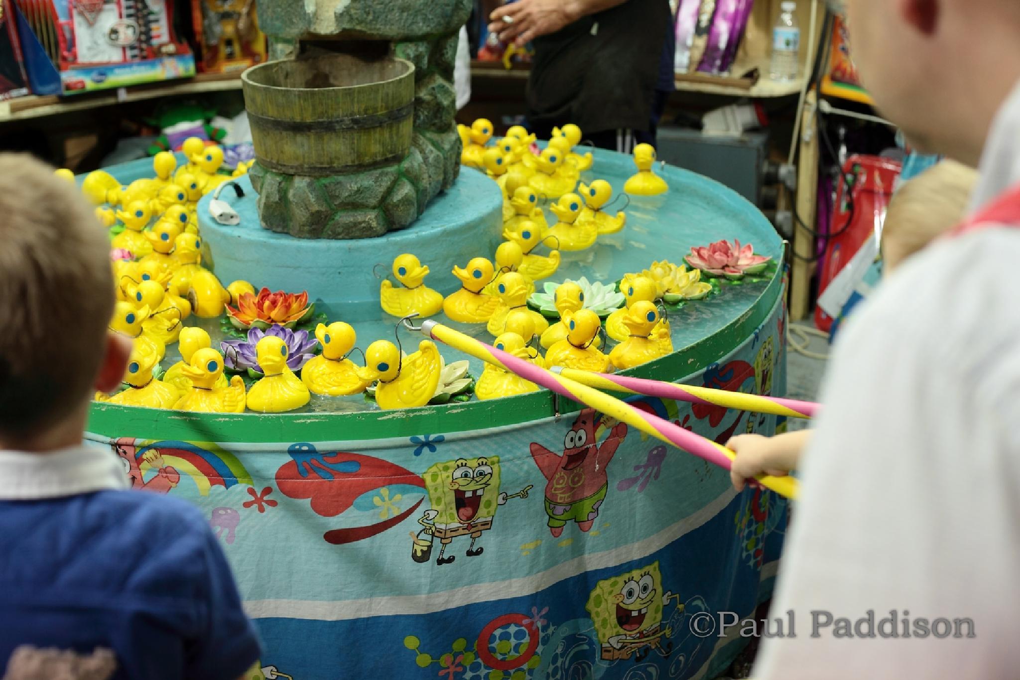 Ducks by Paul Paddison