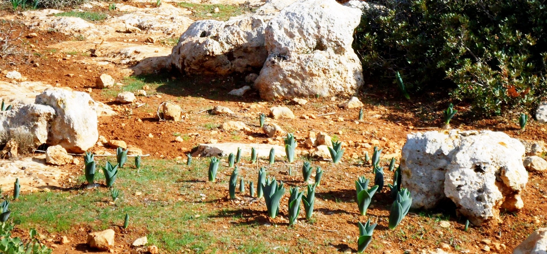 Plants in the wild, waiting for winter and rain, in order to blossom by mohamed Idres